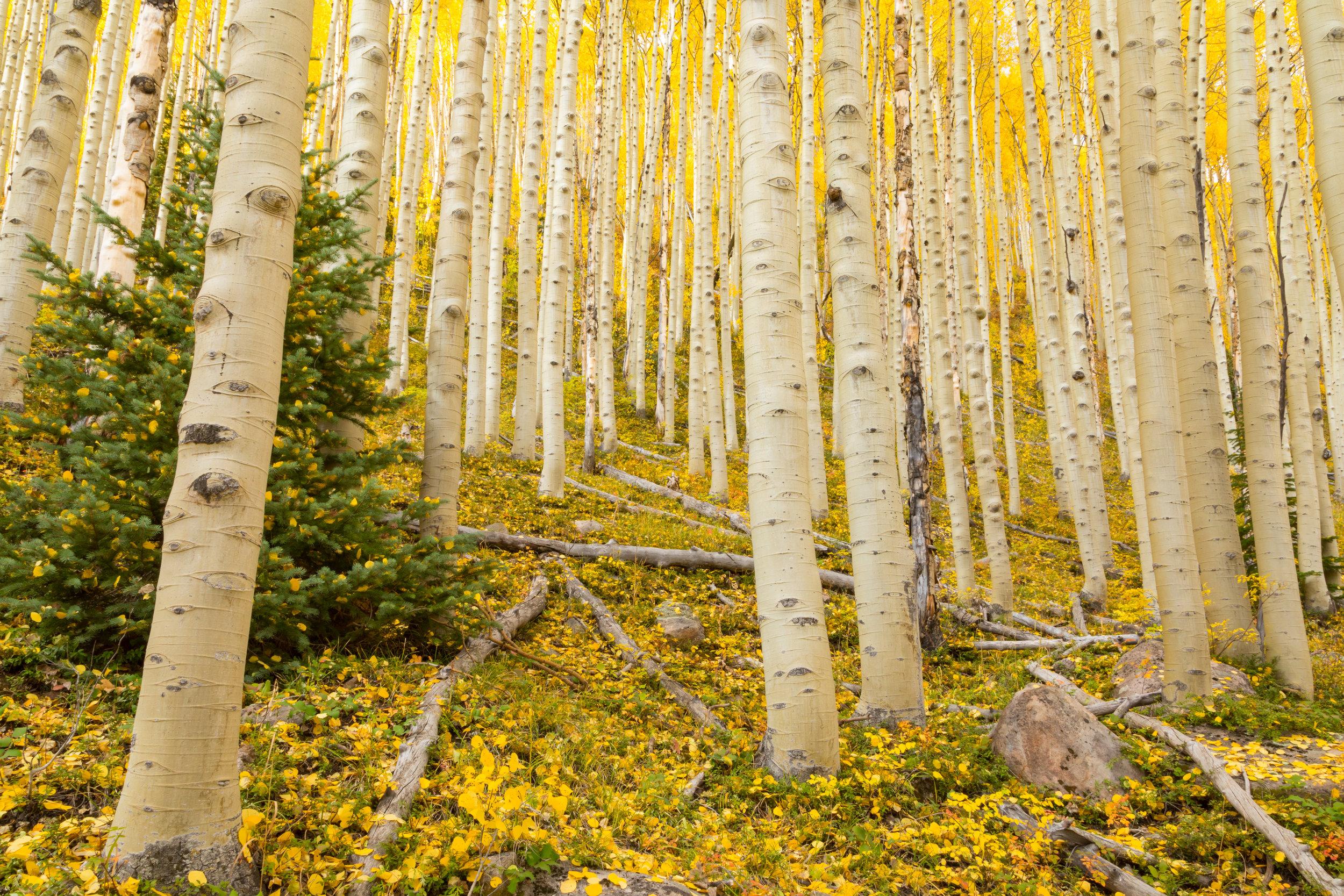 Deer Creek, Image #  5012
