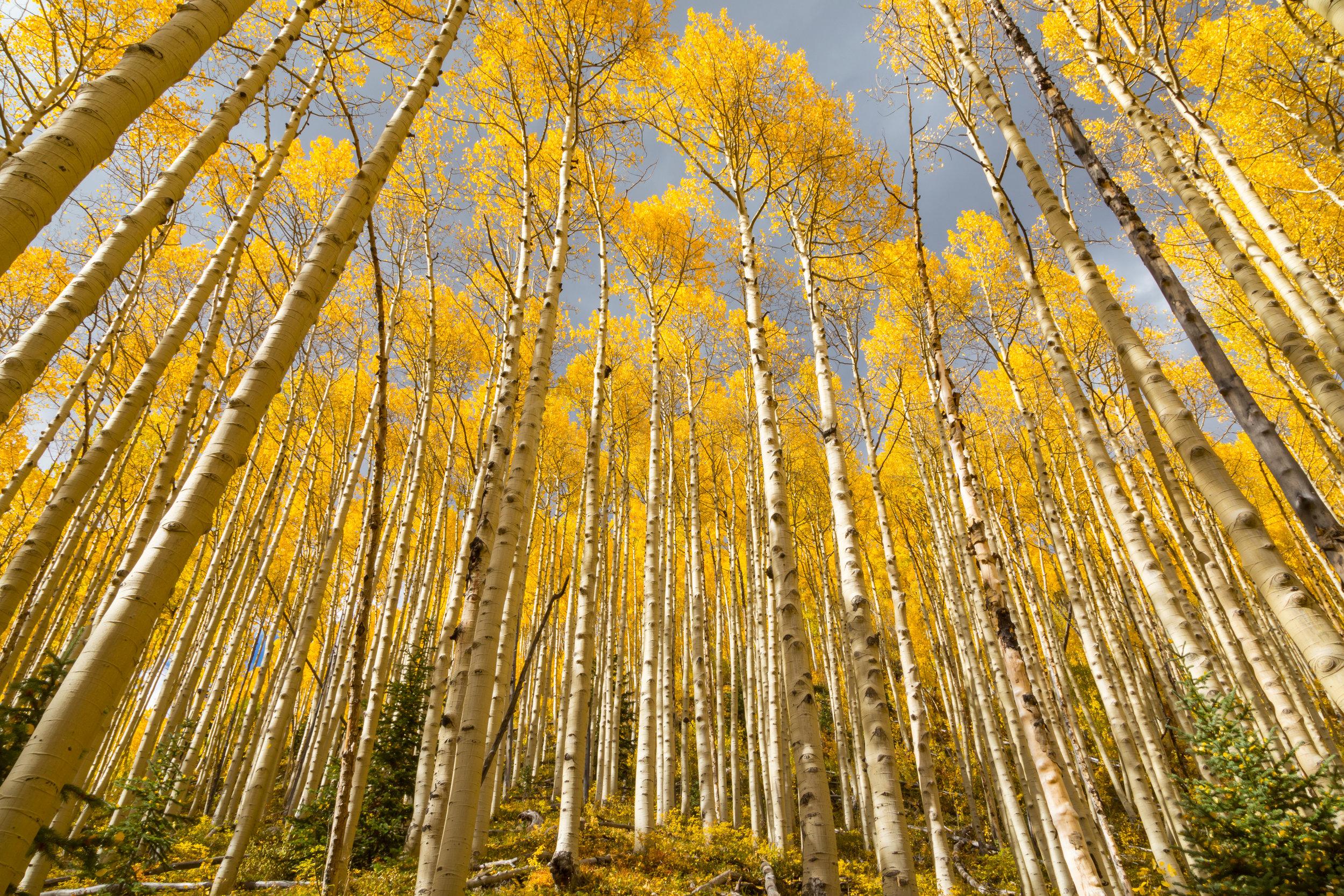 Deer Creek, Image # 5052