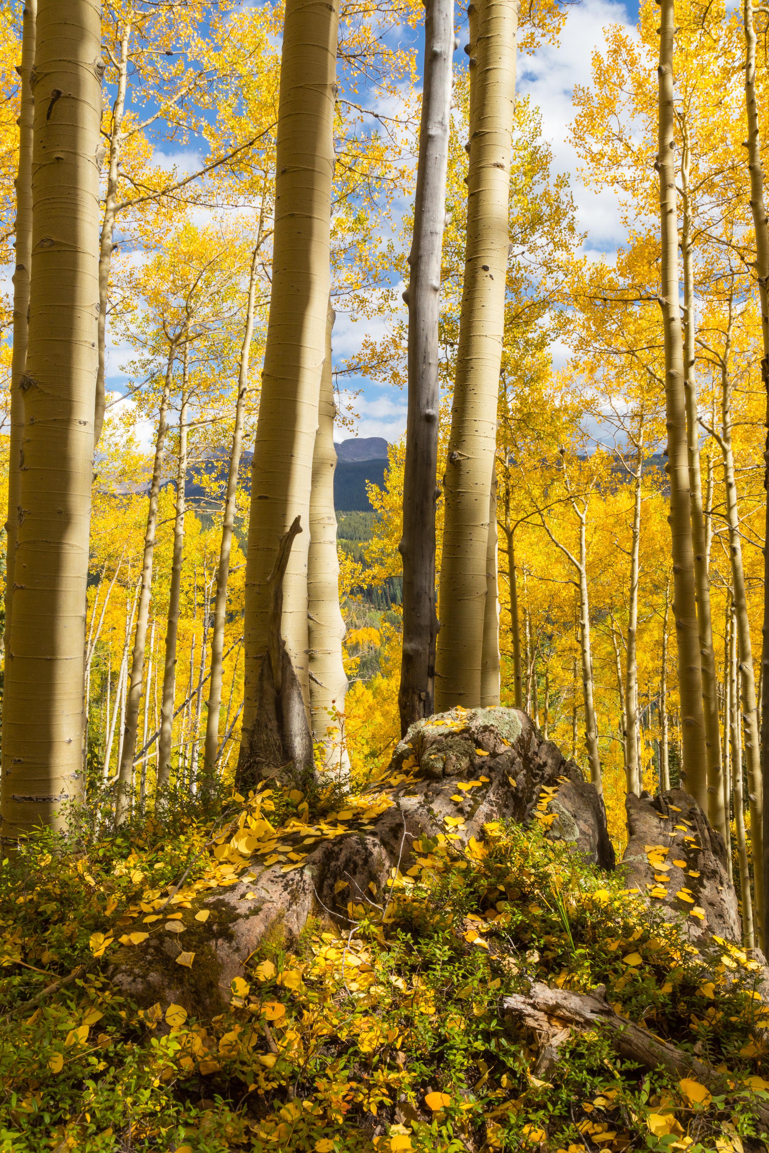 Deer Creek, Image # 5154