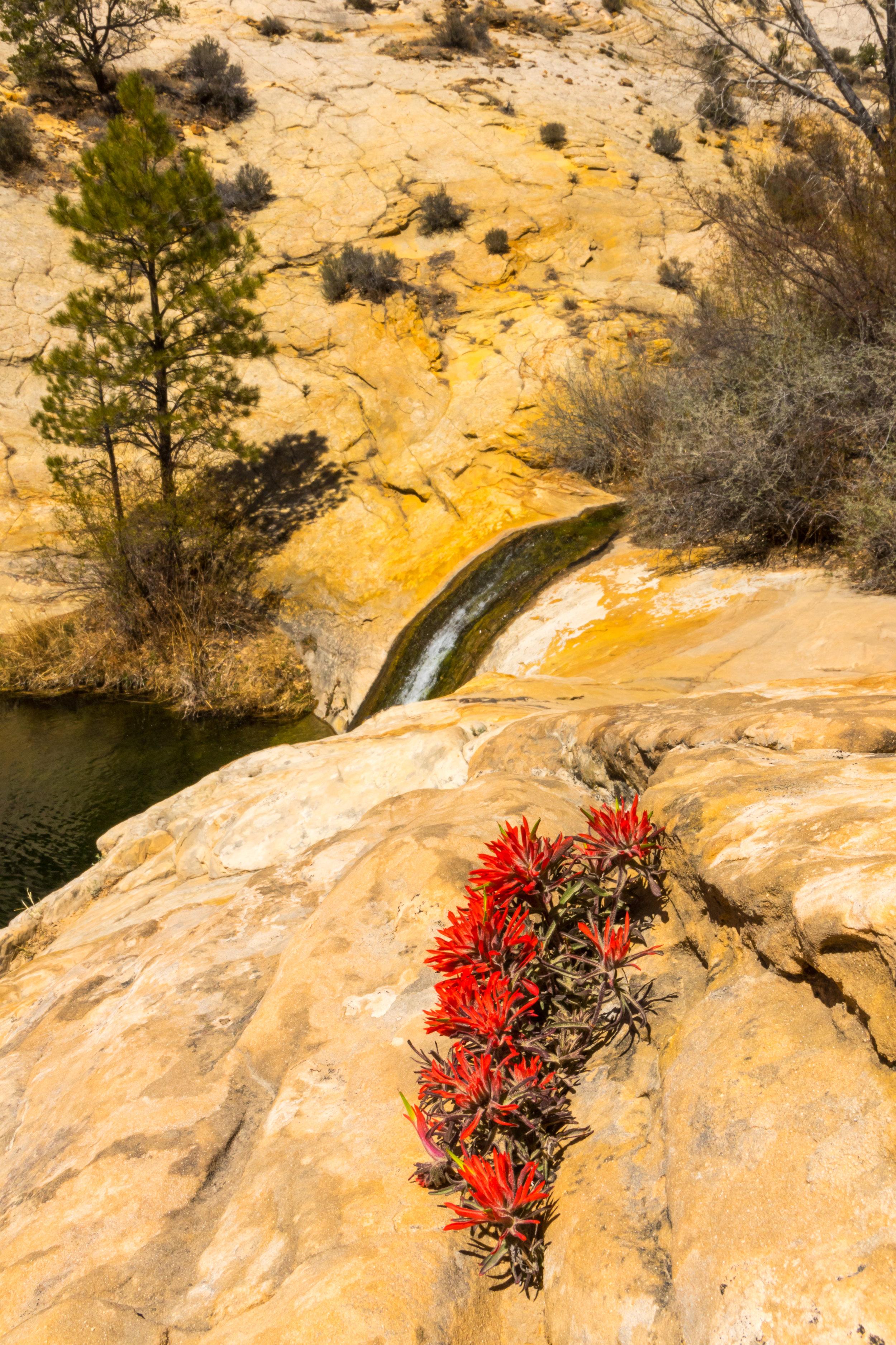 Upper Calf Creek Falls, Image # 2742
