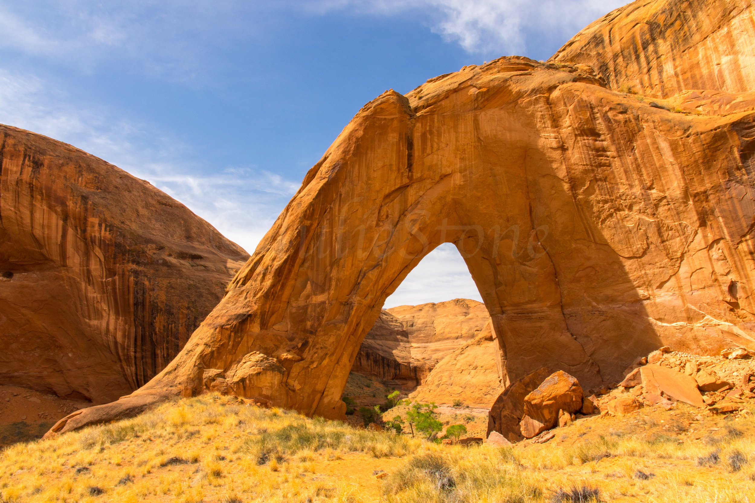 Bow Arch, Image # 2136