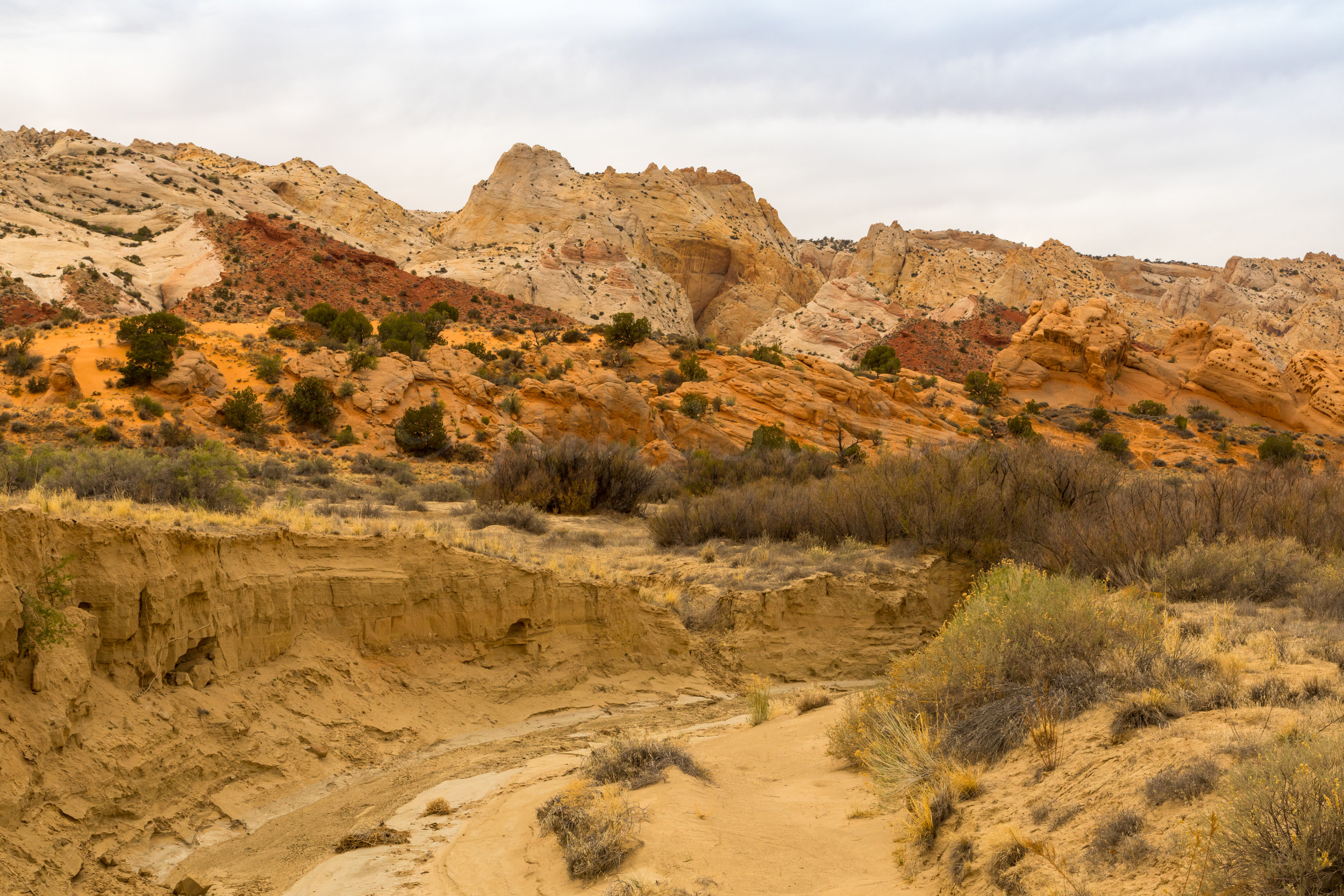 Capitol Reef National Park, Image # 4905