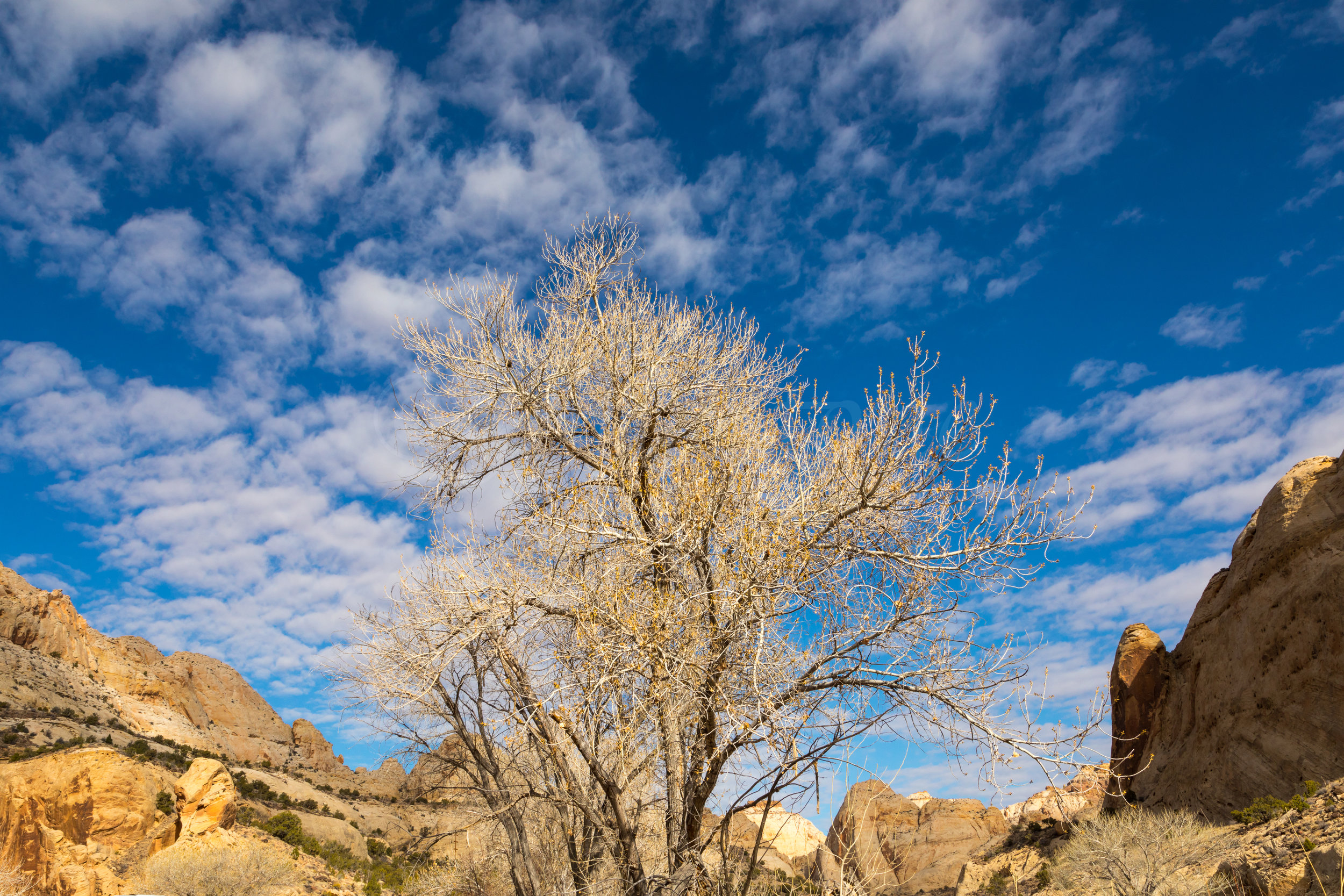 Capitol Reef National Park, Image # 6750