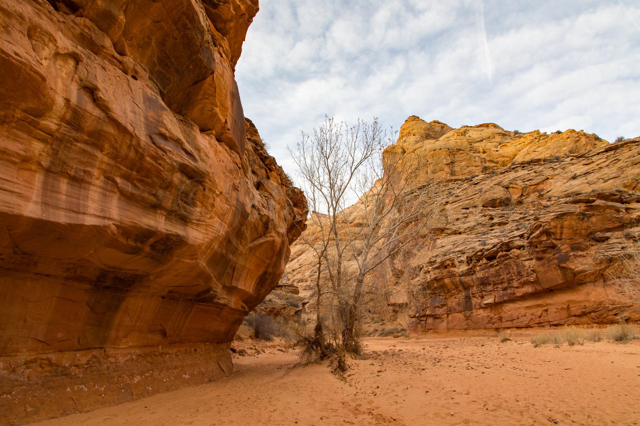Horseshoe Canyon, Image # 7864