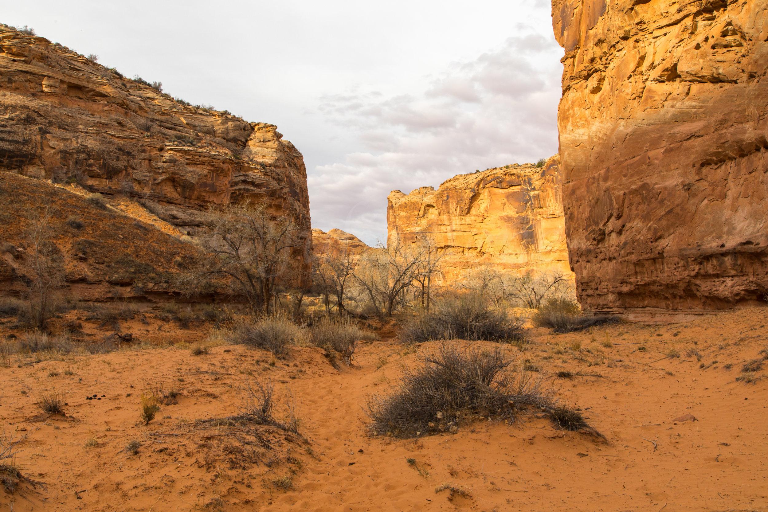 Horseshoe Canyon, Image # 7967