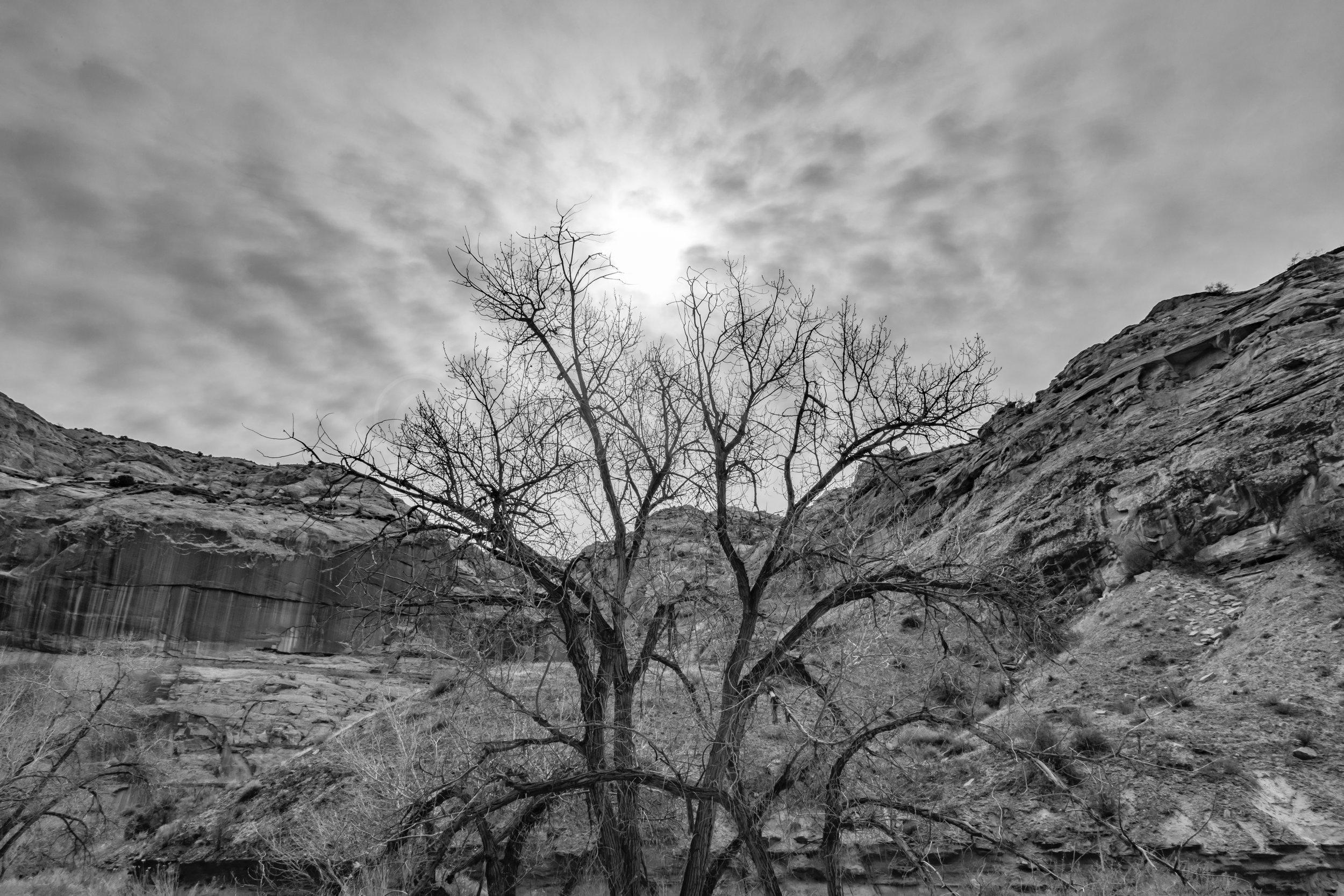 Horseshoe Canyon, Image # 8688