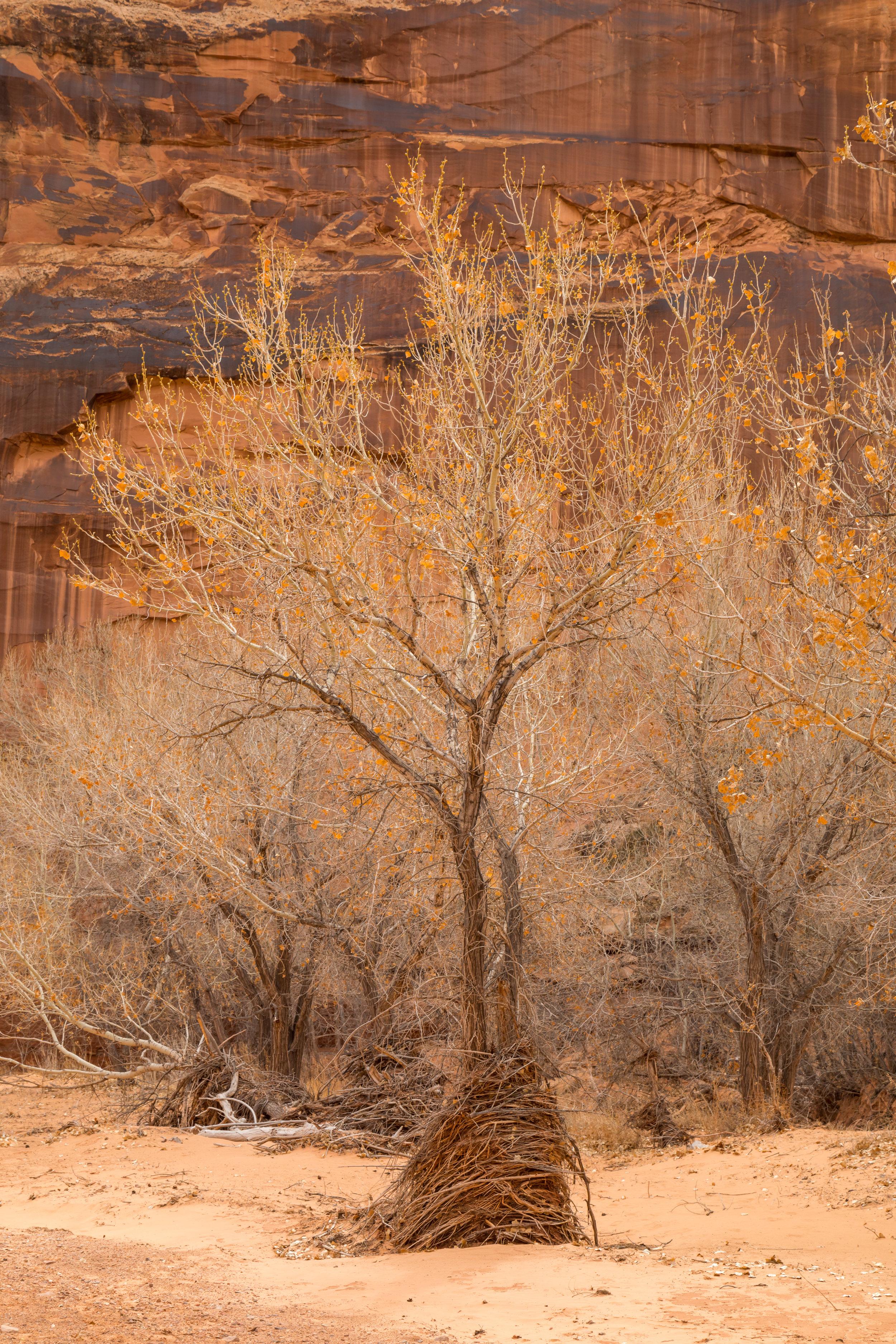 Horseshoe Canyon, Image # 8690