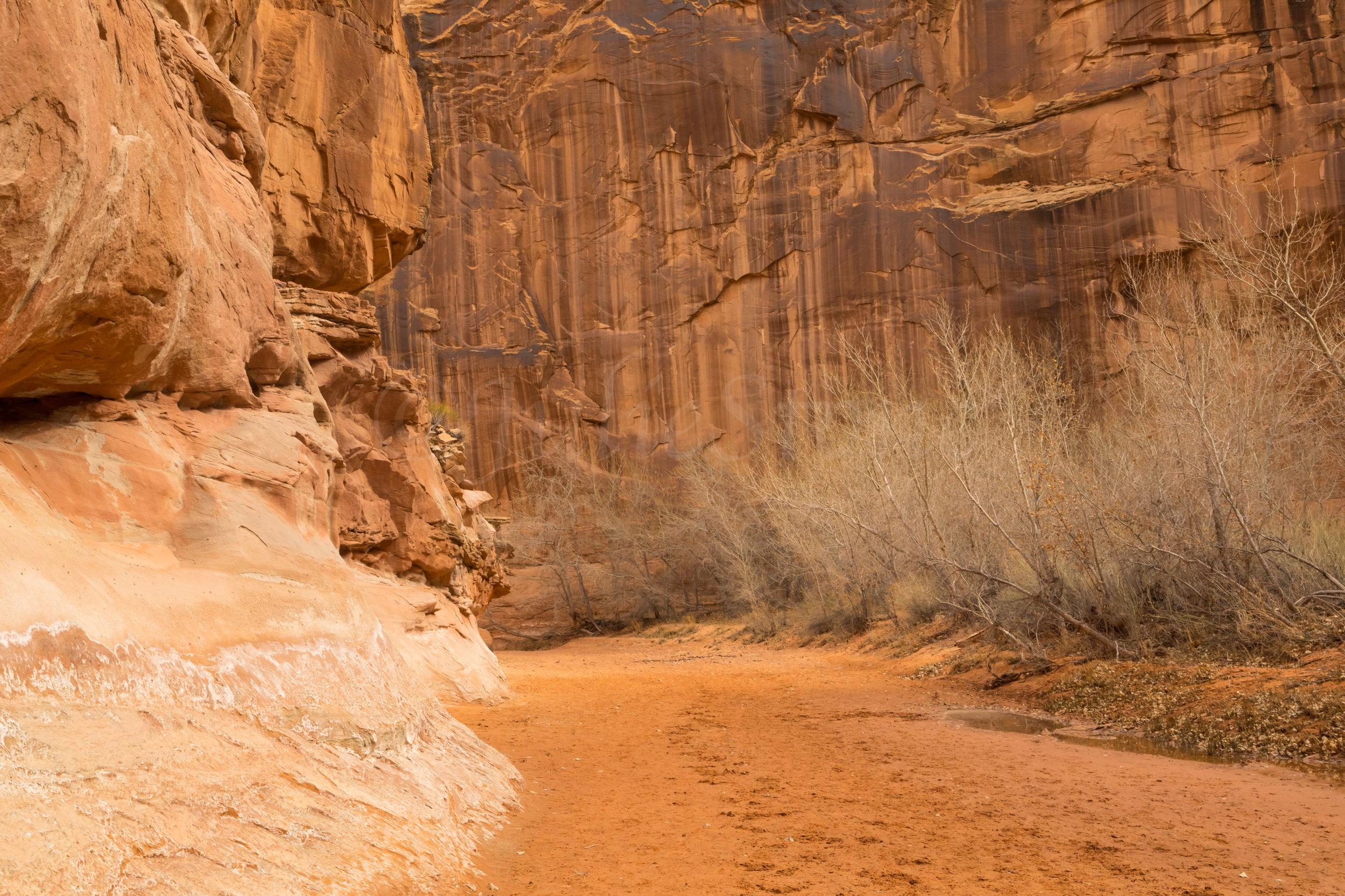 Horseshoe Canyon, Image # 8819