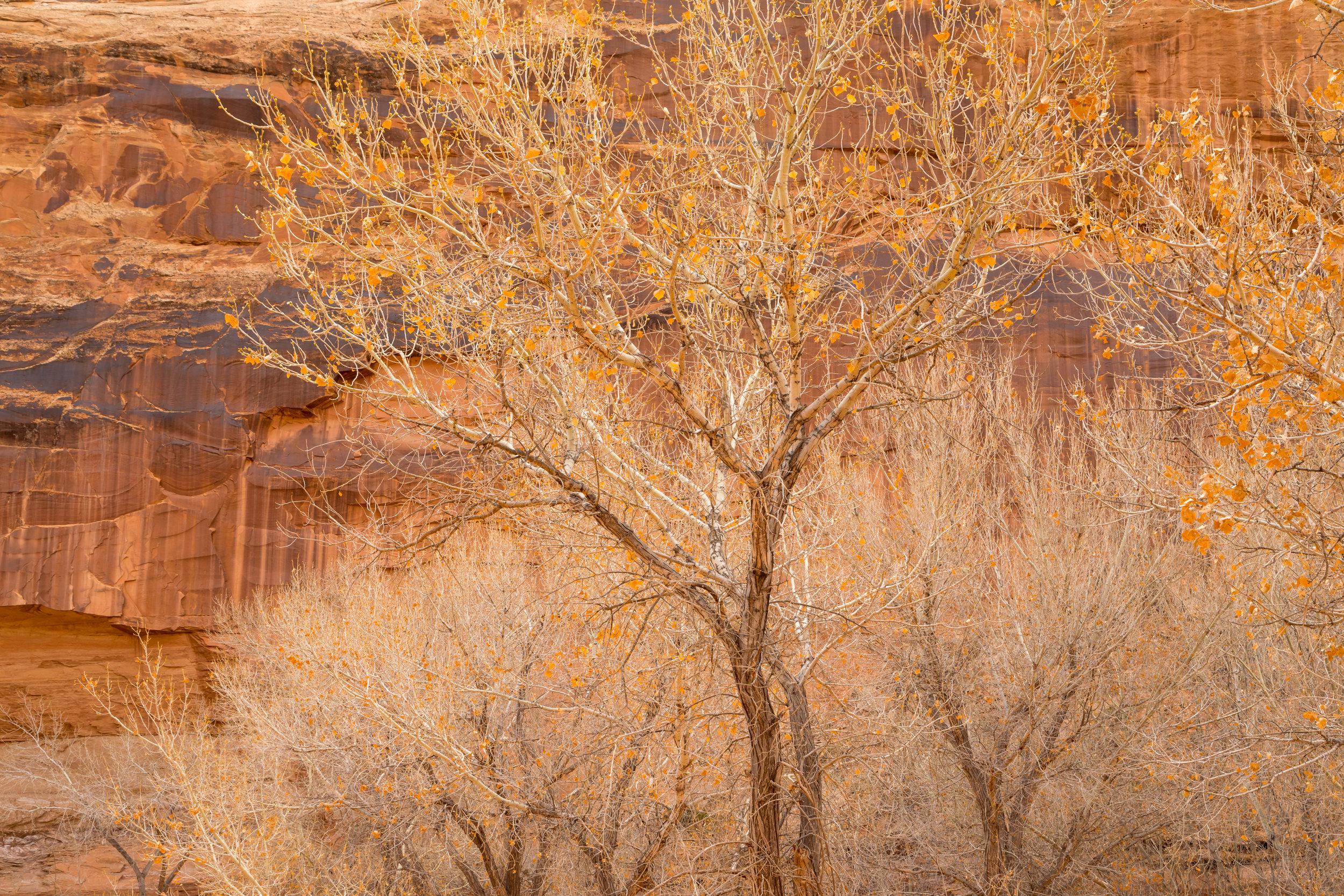 Horseshoe Canyon, Image # 8694