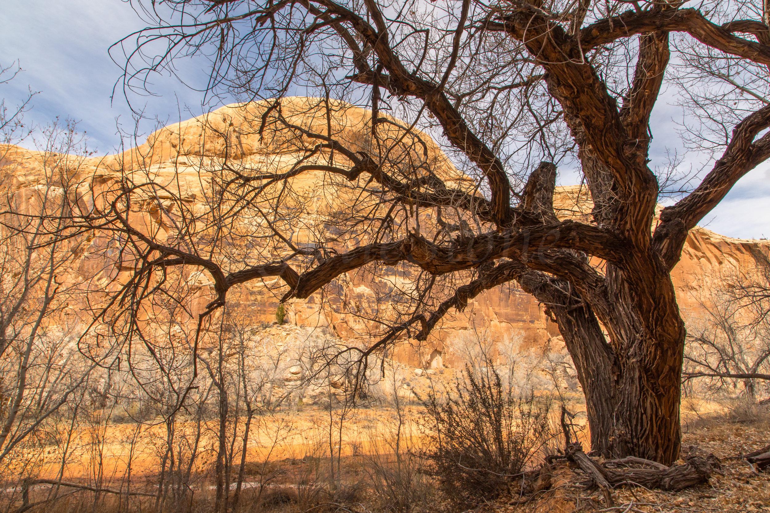 Horseshoe Canyon, Image # 9191