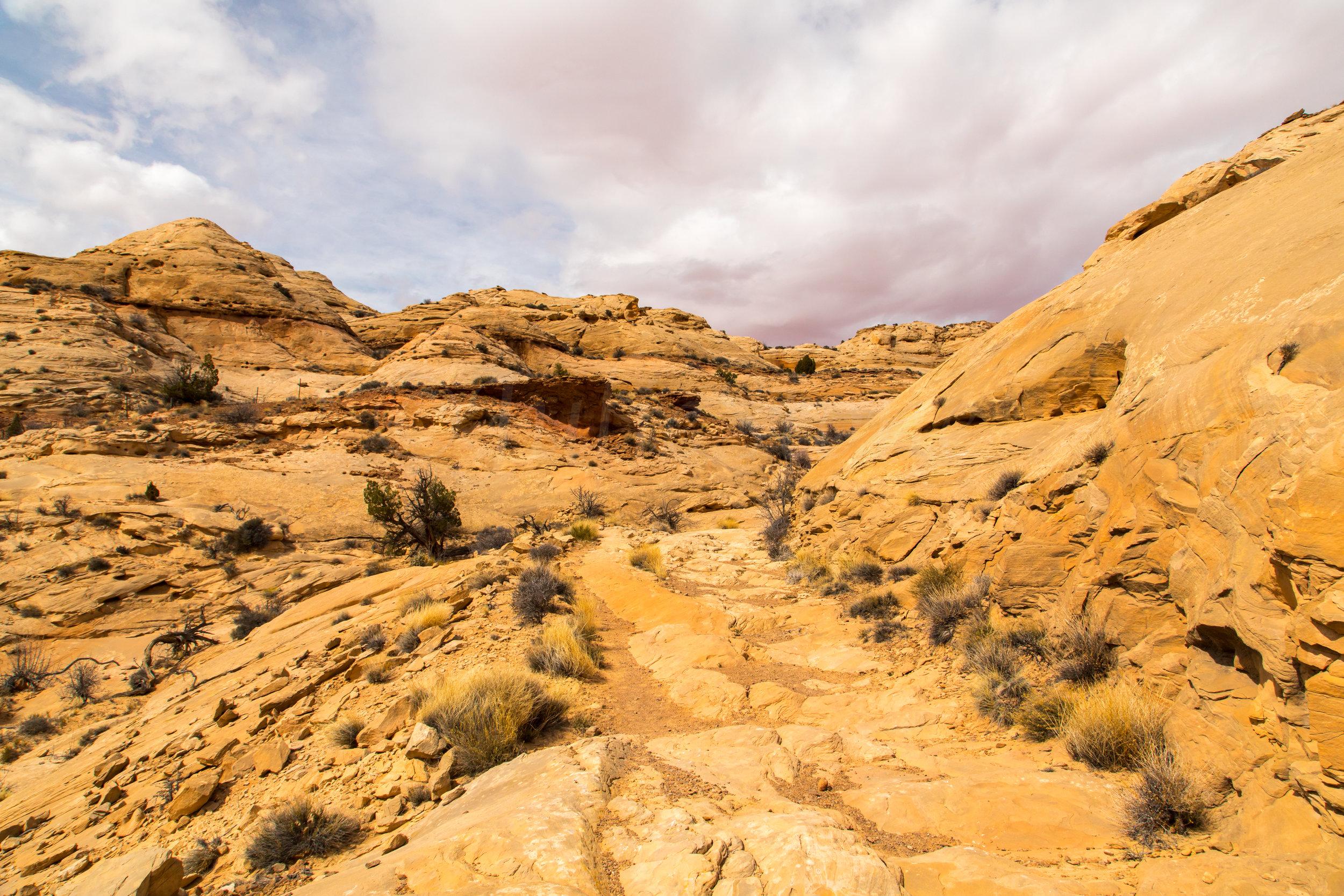 Horseshoe Canyon, Image # 9301