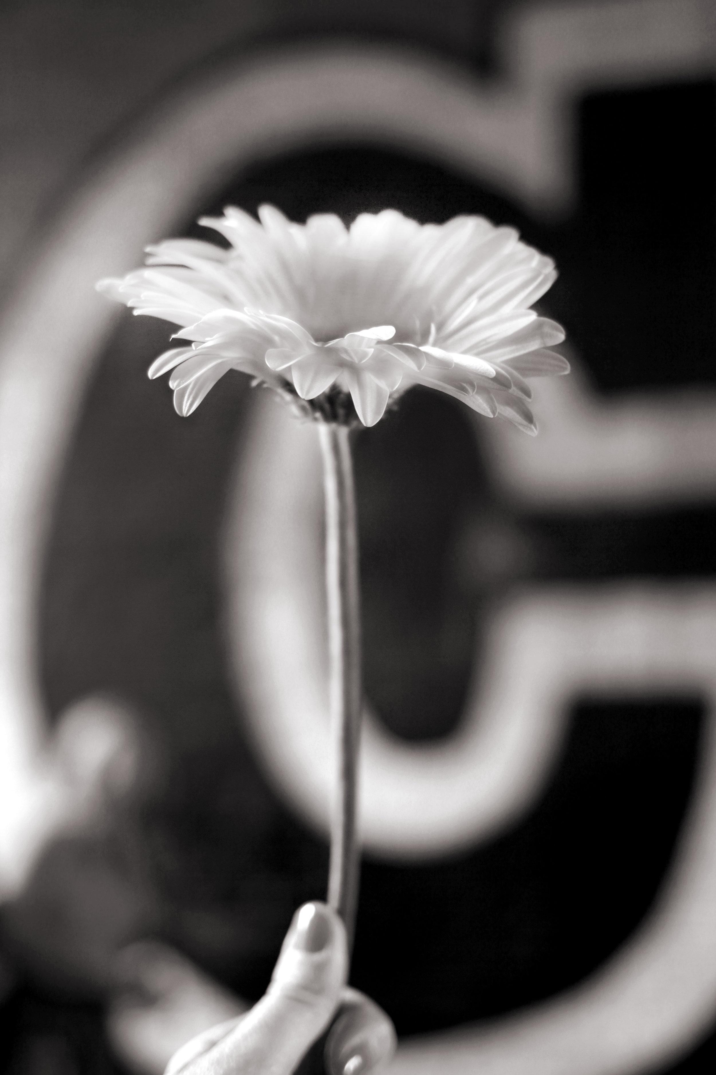 flower-cargo-01.jpg