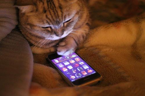 Robot cat finds your iPhone - nightmare scenario