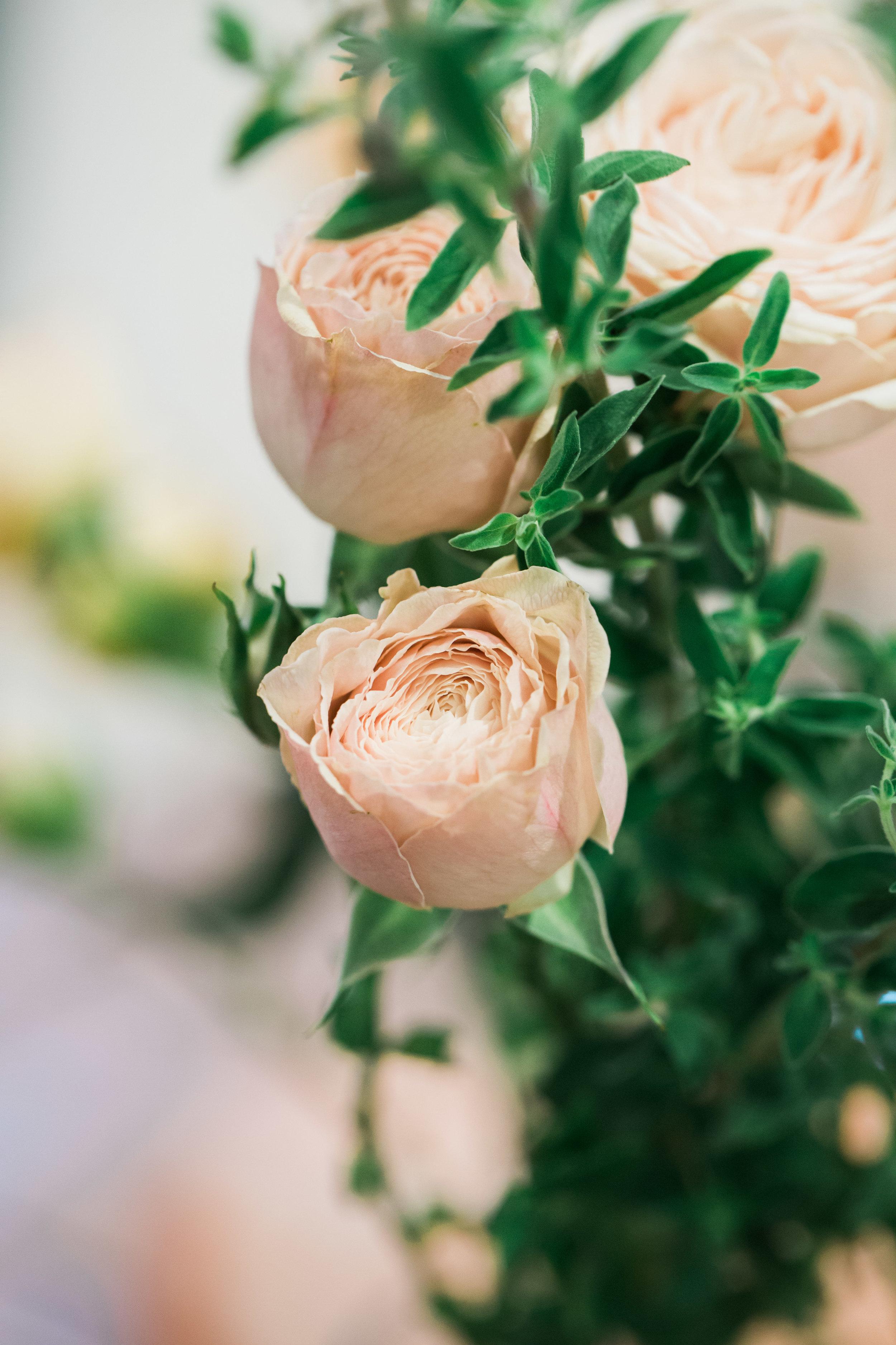 Malaya Gem Garden Spray Rose