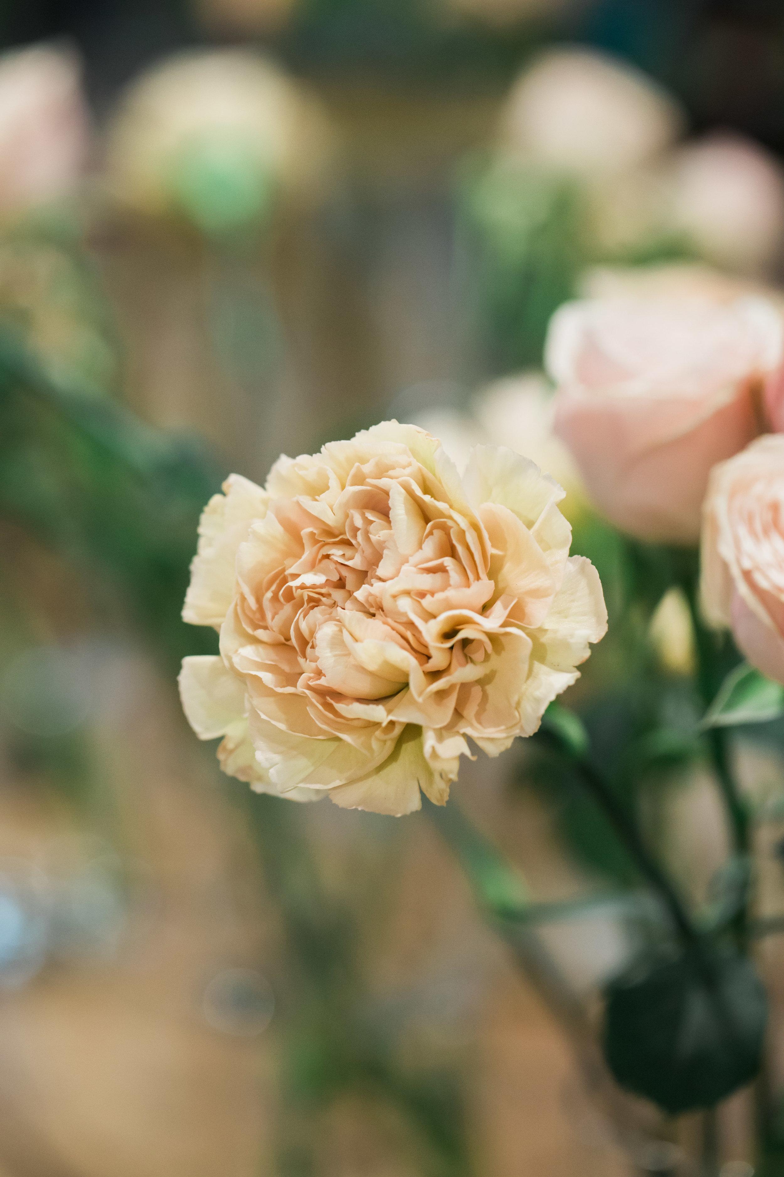 Nude Carnation