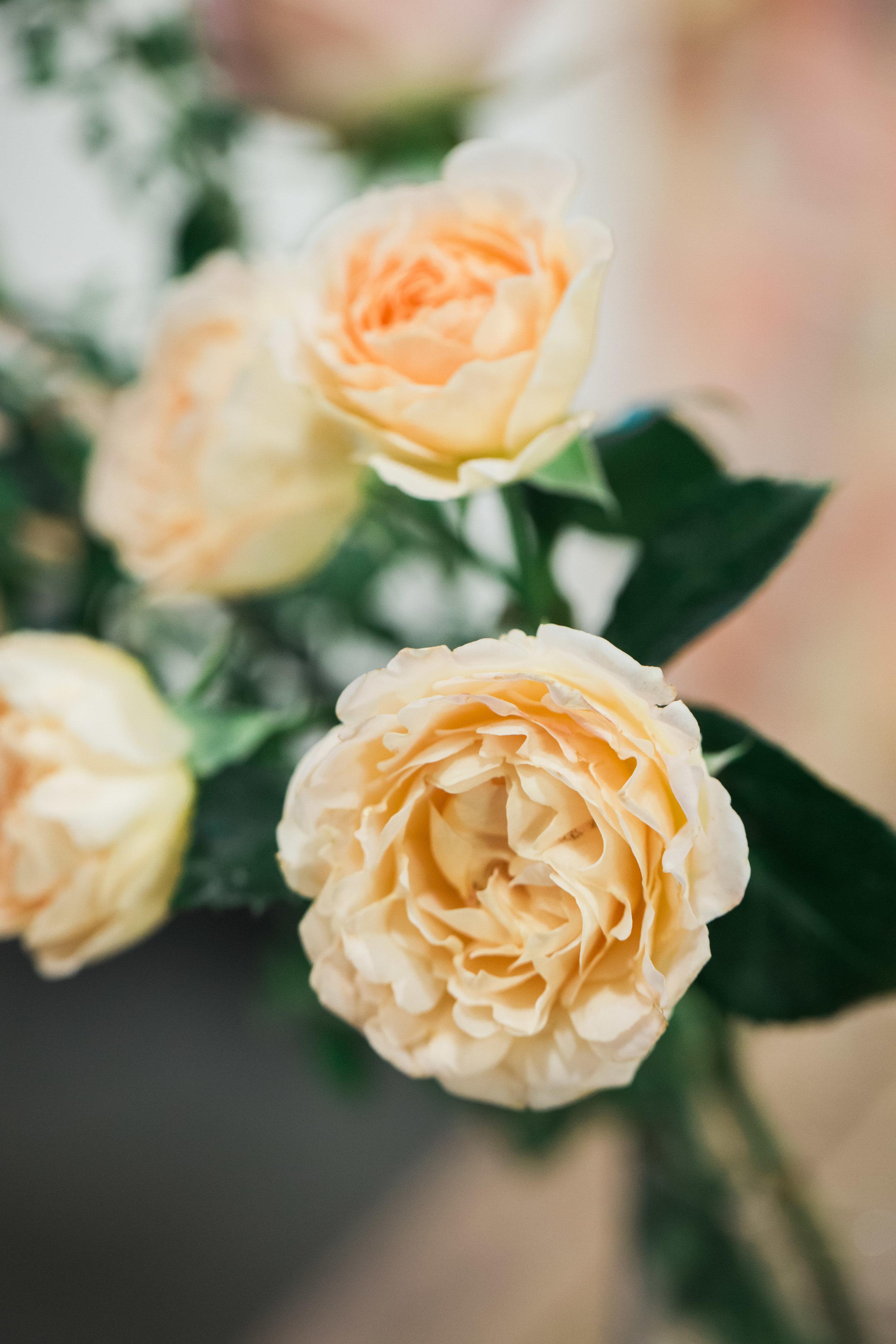 Julianne Peach Garden Spray Rose