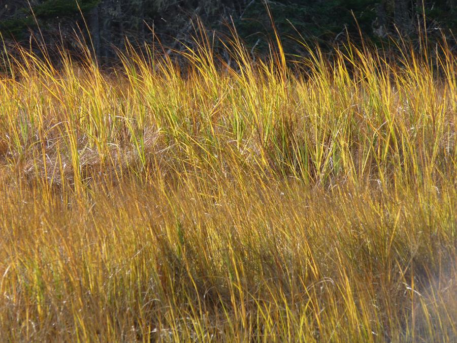 grass, up close