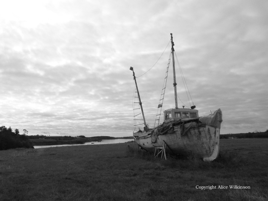boat and grass