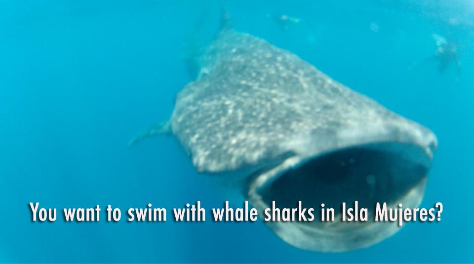 whalesharks.jpg