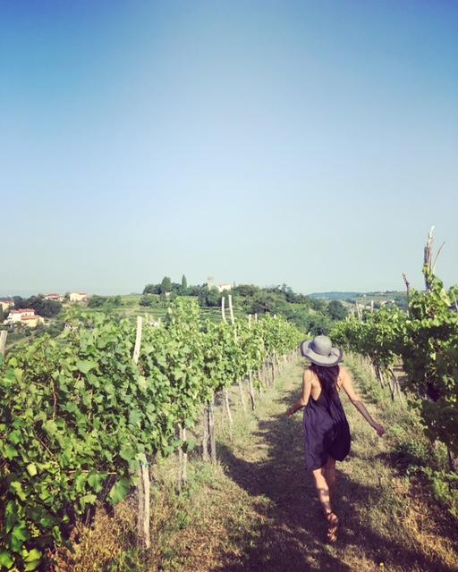 Vineyards of Brda