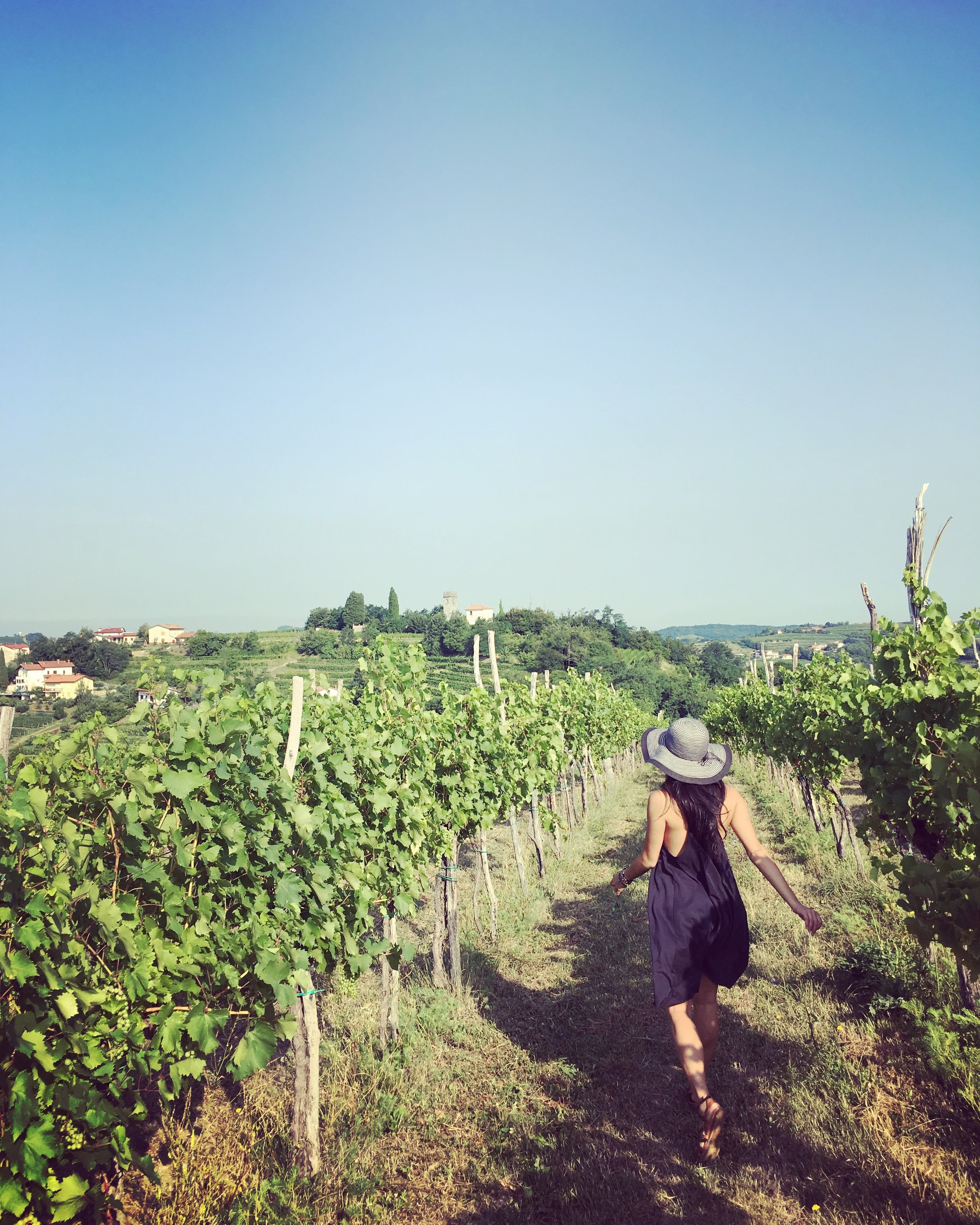Running through the rebula vineyards in Brda.