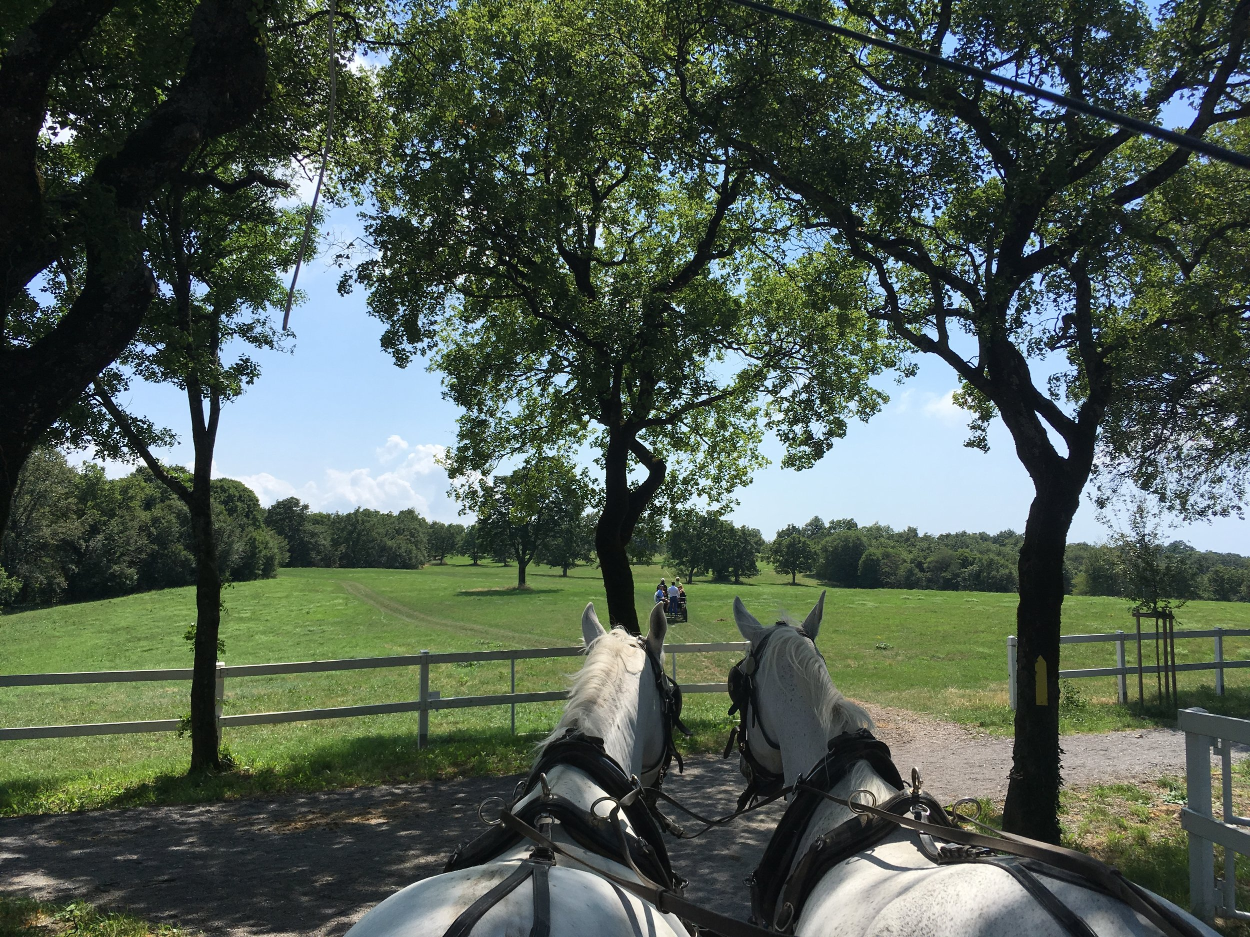 If you don't want to ride the horses, you can also take a horse carriage ride around Lipica.
