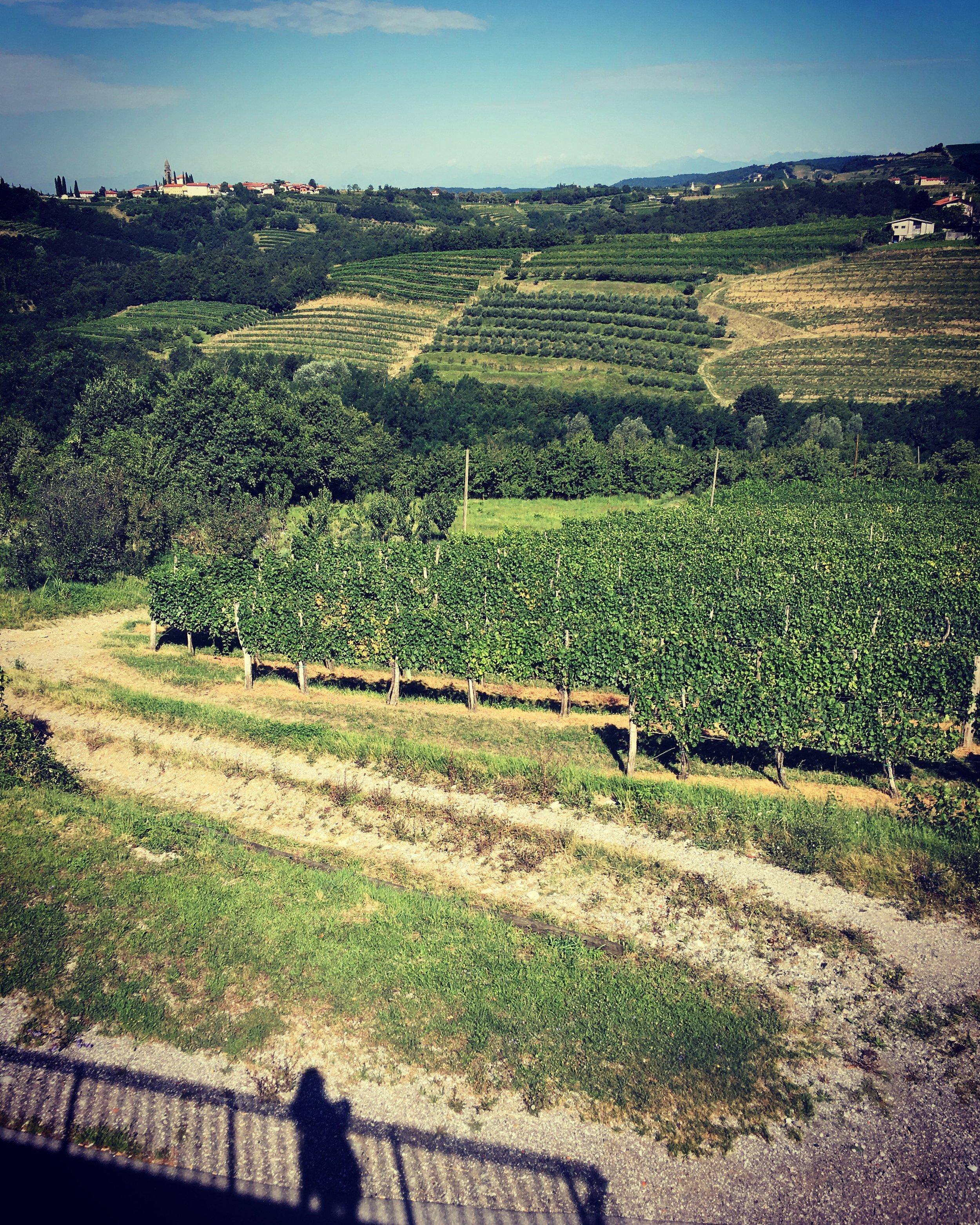 I love this view of the vineyards from  Vila Kozana .