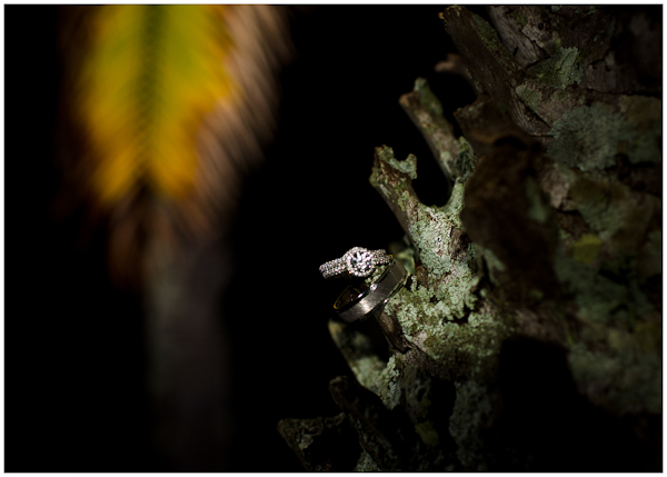 ring shot with palm leaves in background