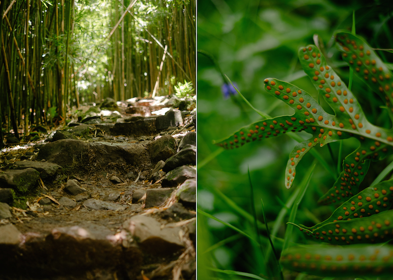 maui-family-fujifilm-084d.jpg