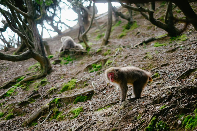 japan-travel-from-oregon-166a.jpg