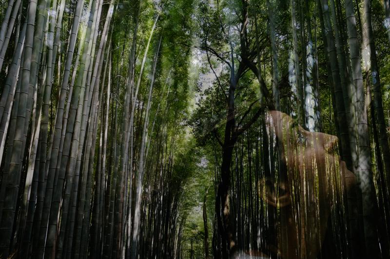 japan-travel-from-oregon-172.jpg