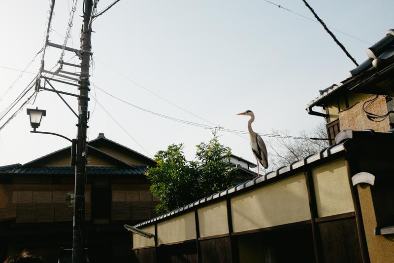japan-travel-from-oregon-178.jpg