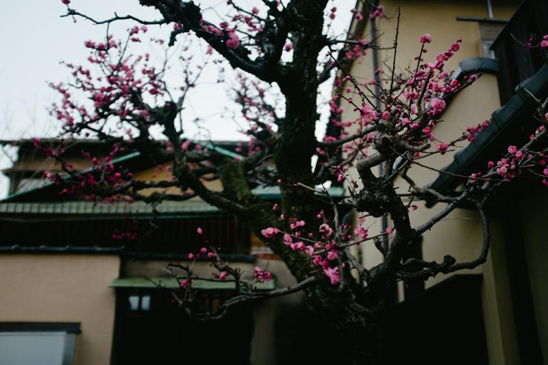 japan-travel-from-oregon-189.jpg