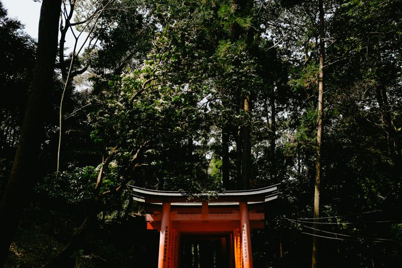 japan-travel-from-oregon-221.jpg