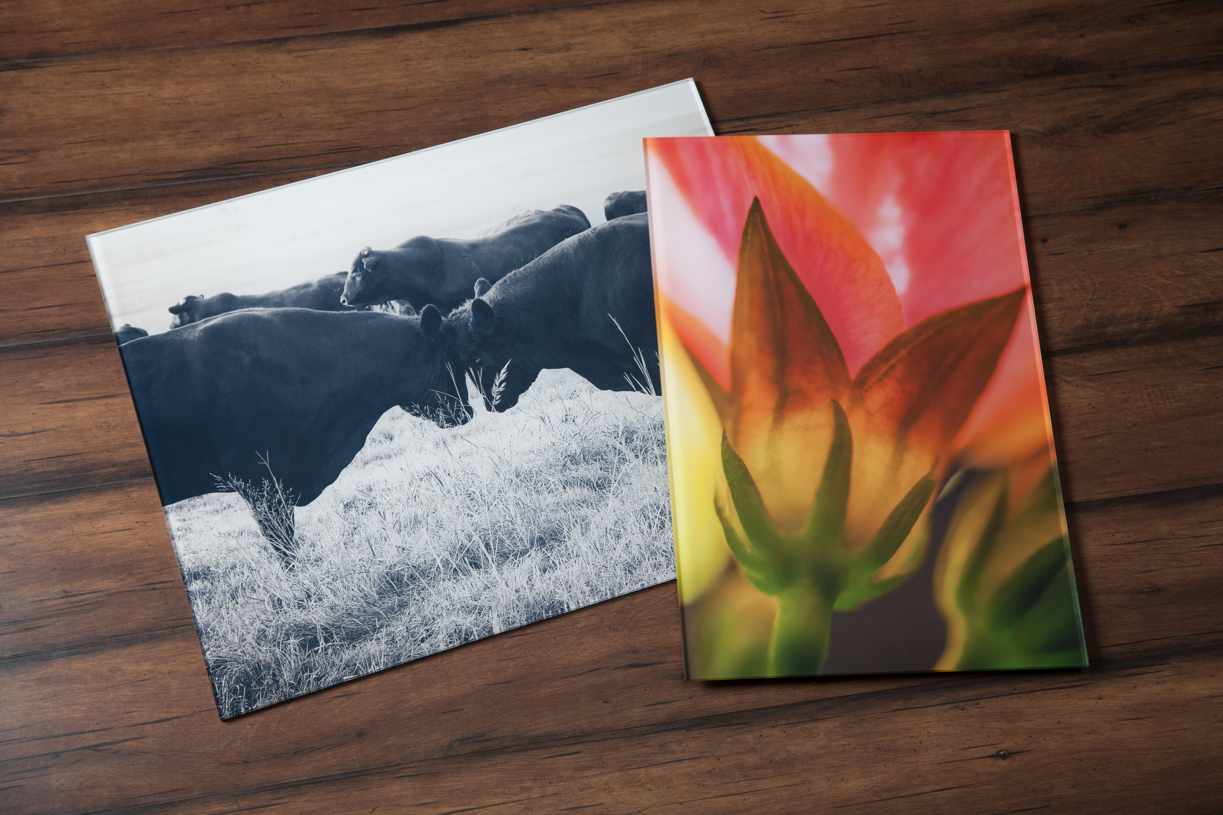 NEW   Acrylic Prints