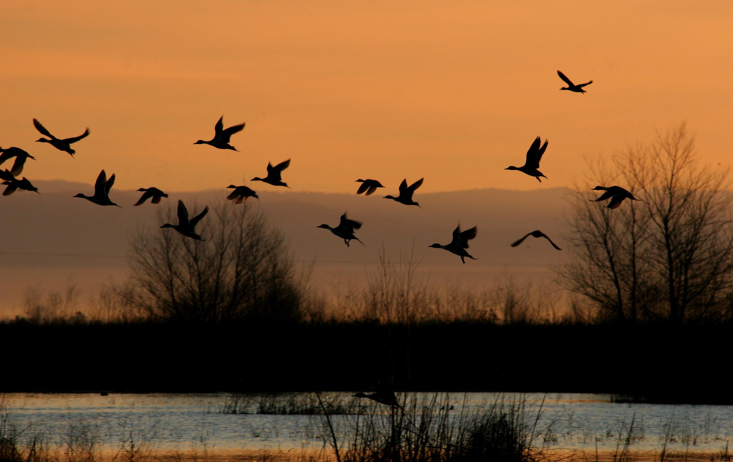 Sunrise at the wetland.