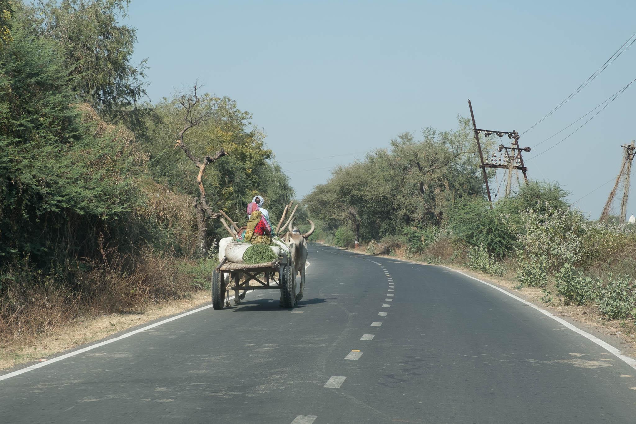 India-2017-7220.jpg