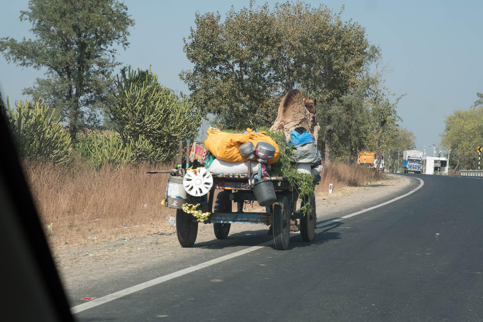India-2017-7298.jpg