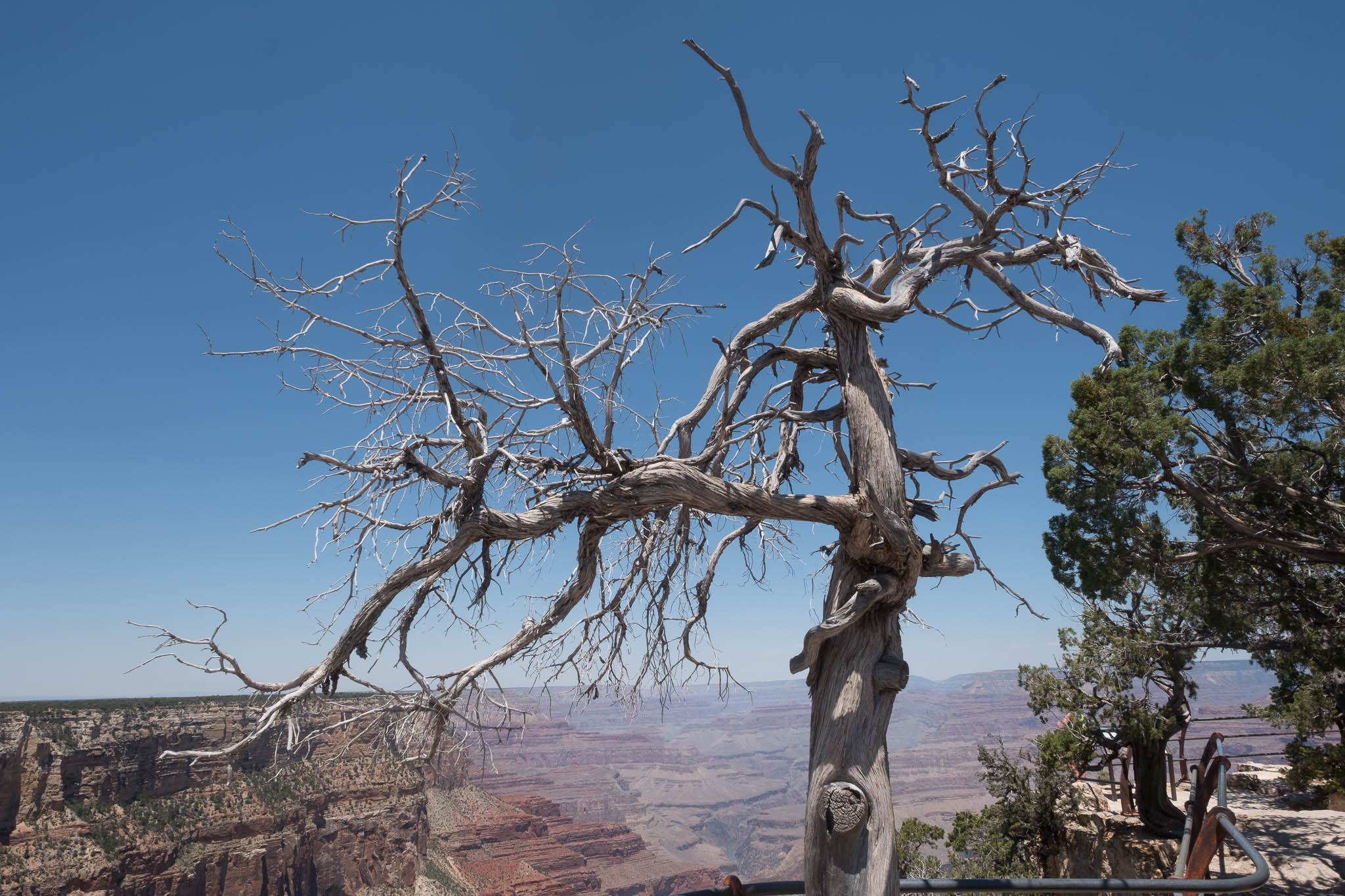 Grand Canyon-2017-8028.jpg