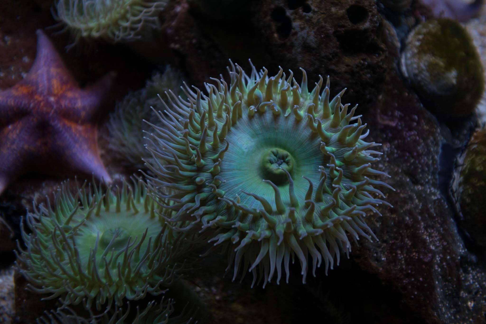 Aquarium of the Pacific-3-30-16-0773.jpg