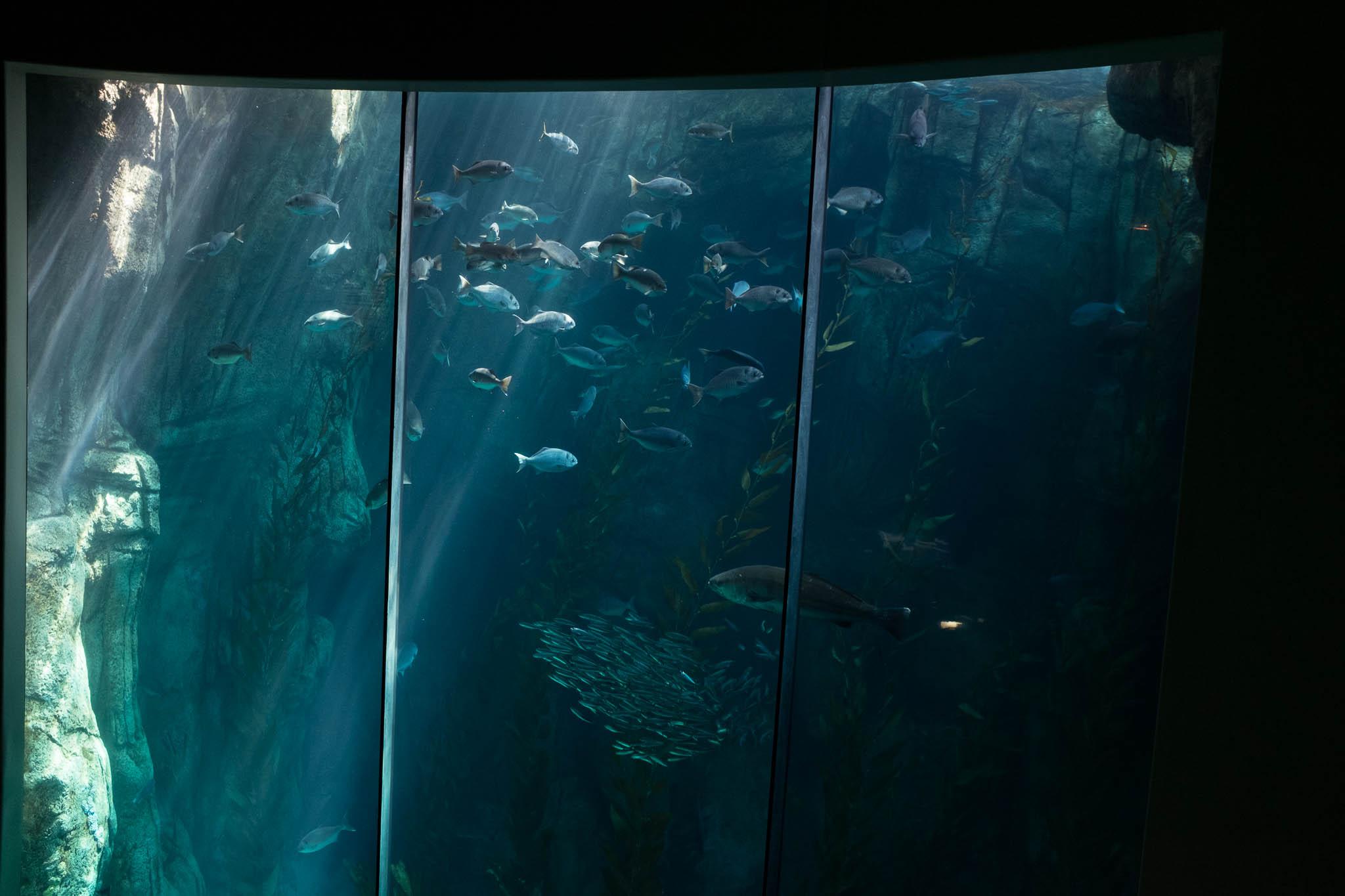 Aquarium of the Pacific-3-30-16-1073.jpg