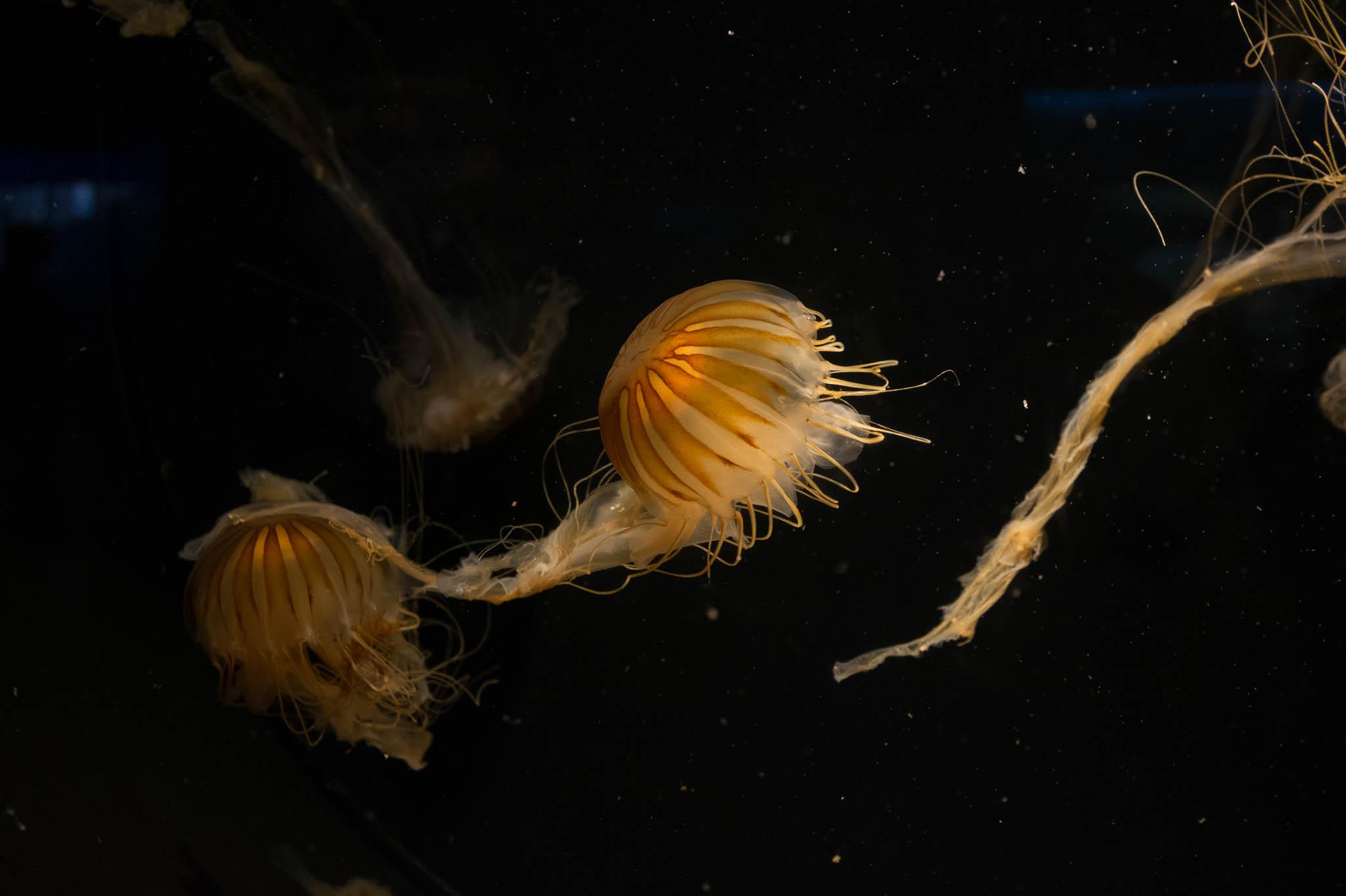Aquarium of the Pacific-3-30-16-1093.jpg