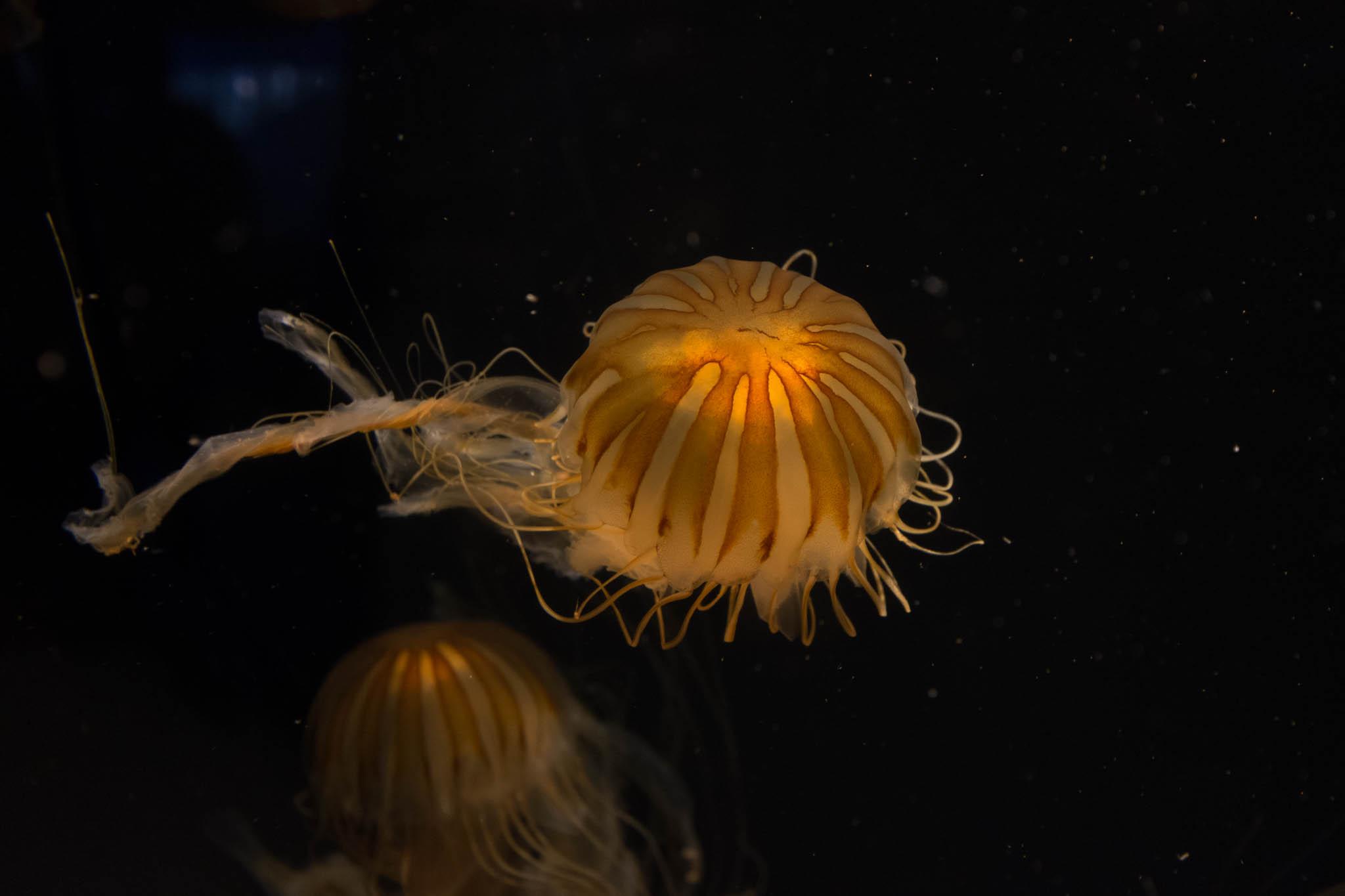 Aquarium of the Pacific-3-30-16-1103.jpg