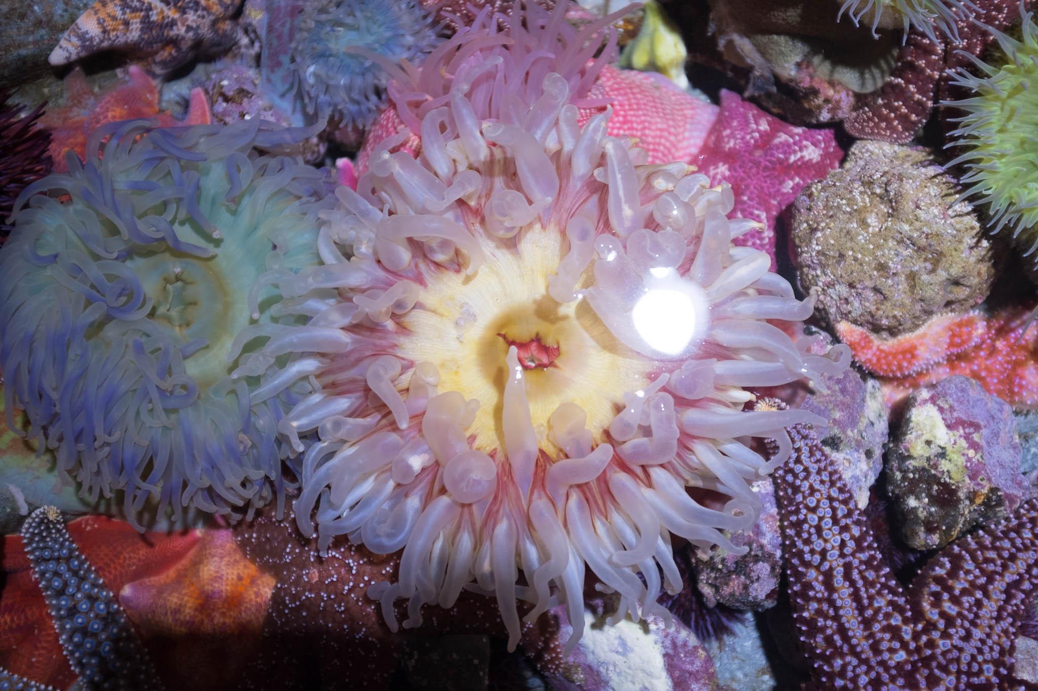 Aquarium of the Pacific-3-30-16-1246.jpg