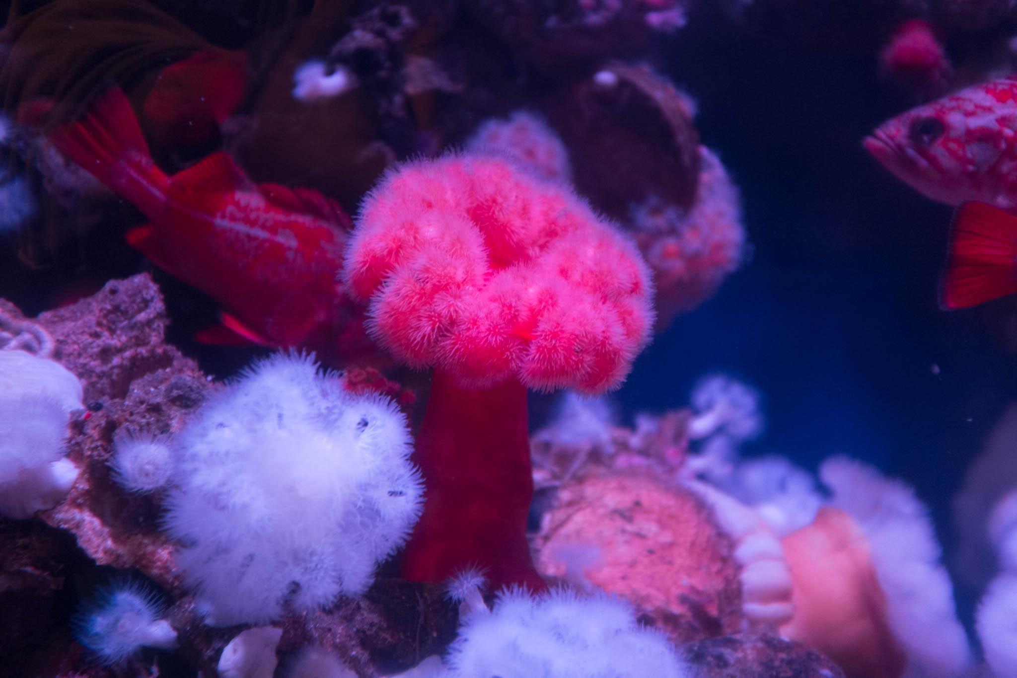 Aquarium of the Pacific-3-30-16-1276.jpg