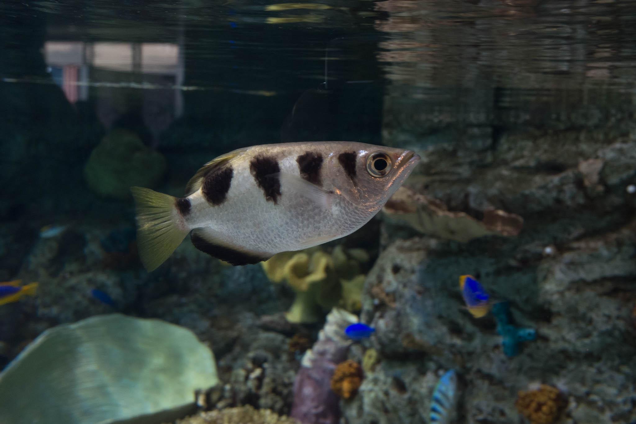 Aquarium of the Pacific-3-30-16-1346.jpg