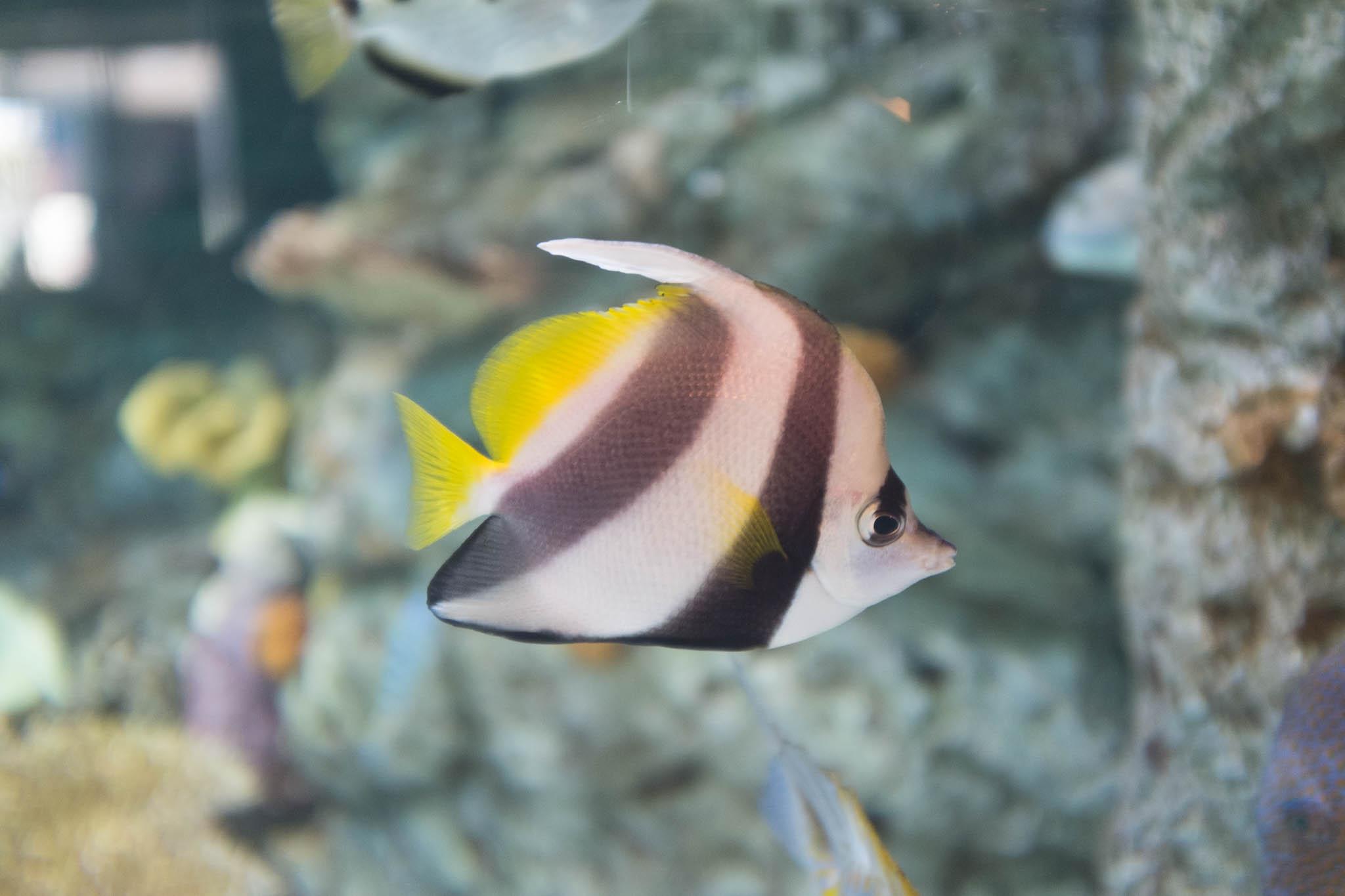 Aquarium of the Pacific-3-30-16-1357.jpg