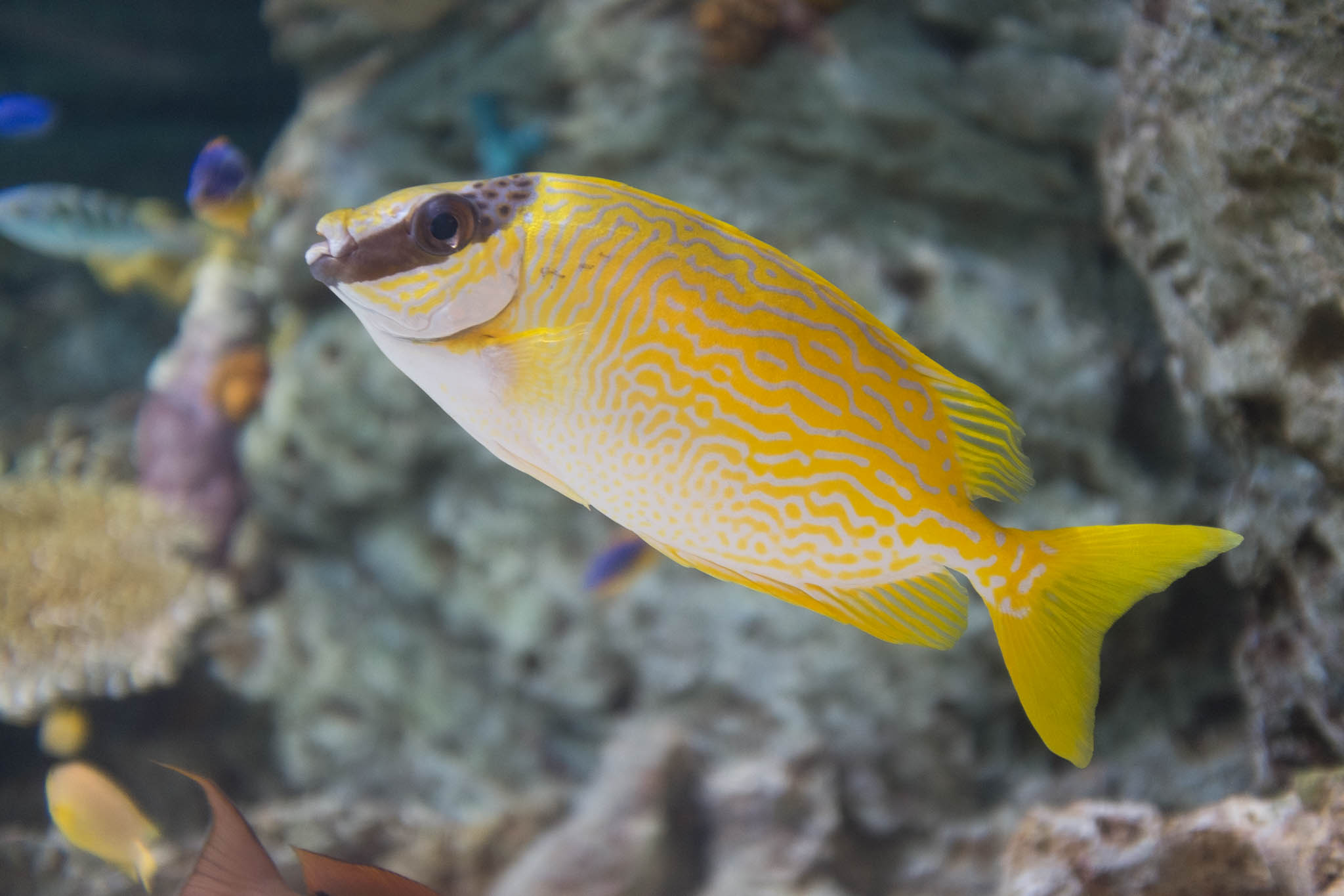 Aquarium of the Pacific-3-30-16-1368.jpg