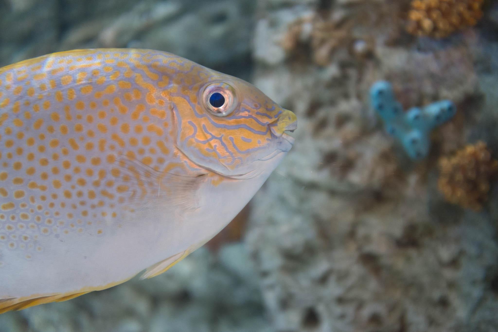 Aquarium of the Pacific-3-30-16-1369.jpg