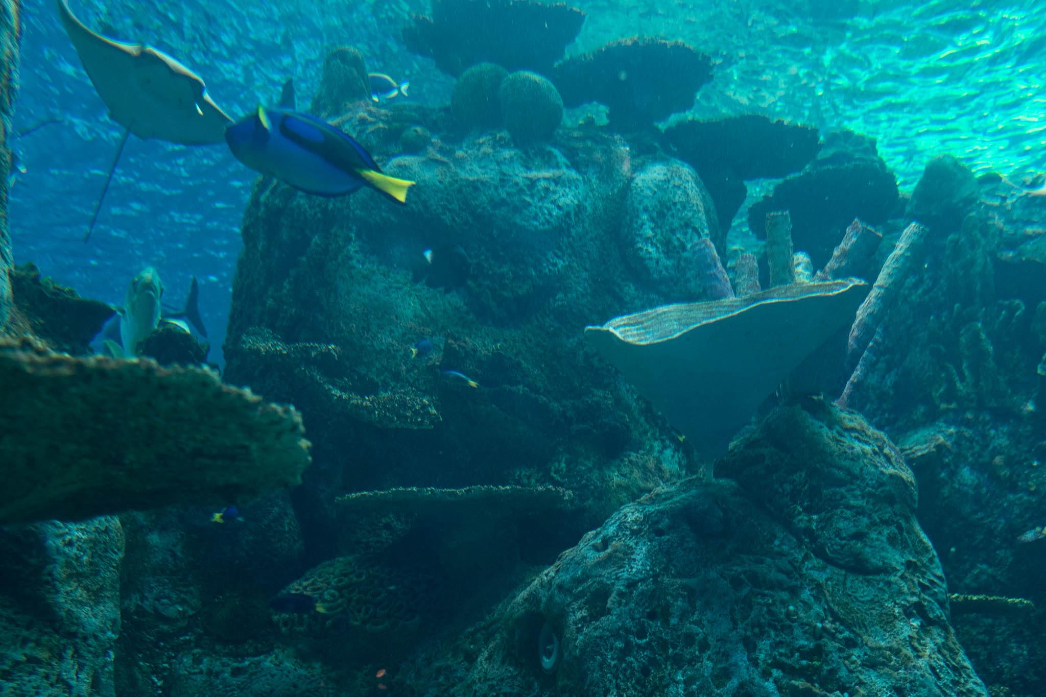 Aquarium of the Pacific-3-30-16-1393.jpg